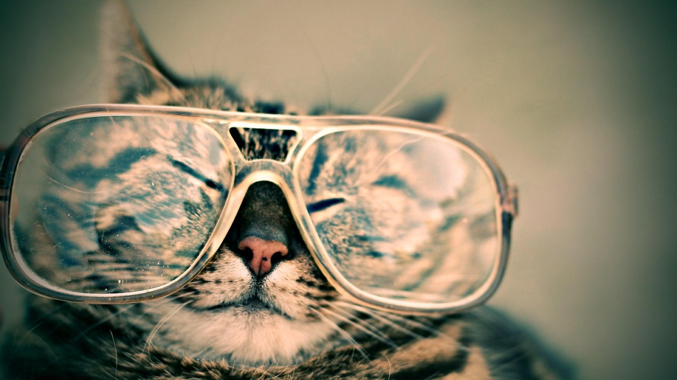 Cats, Big Glasses, Specs, Ph