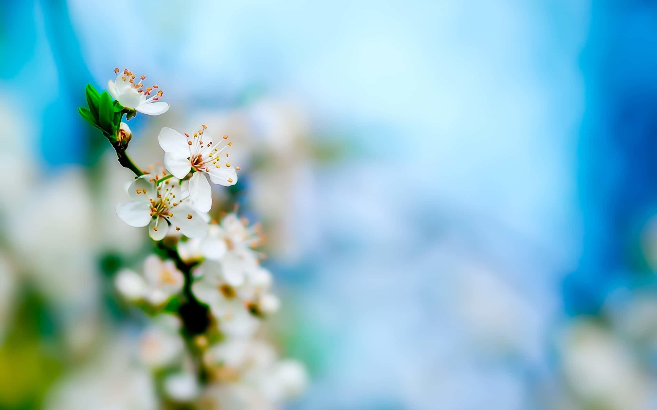 Flower HD Desktop Backgrounds Wallpaper. Cool Desktop Images, Flower images
