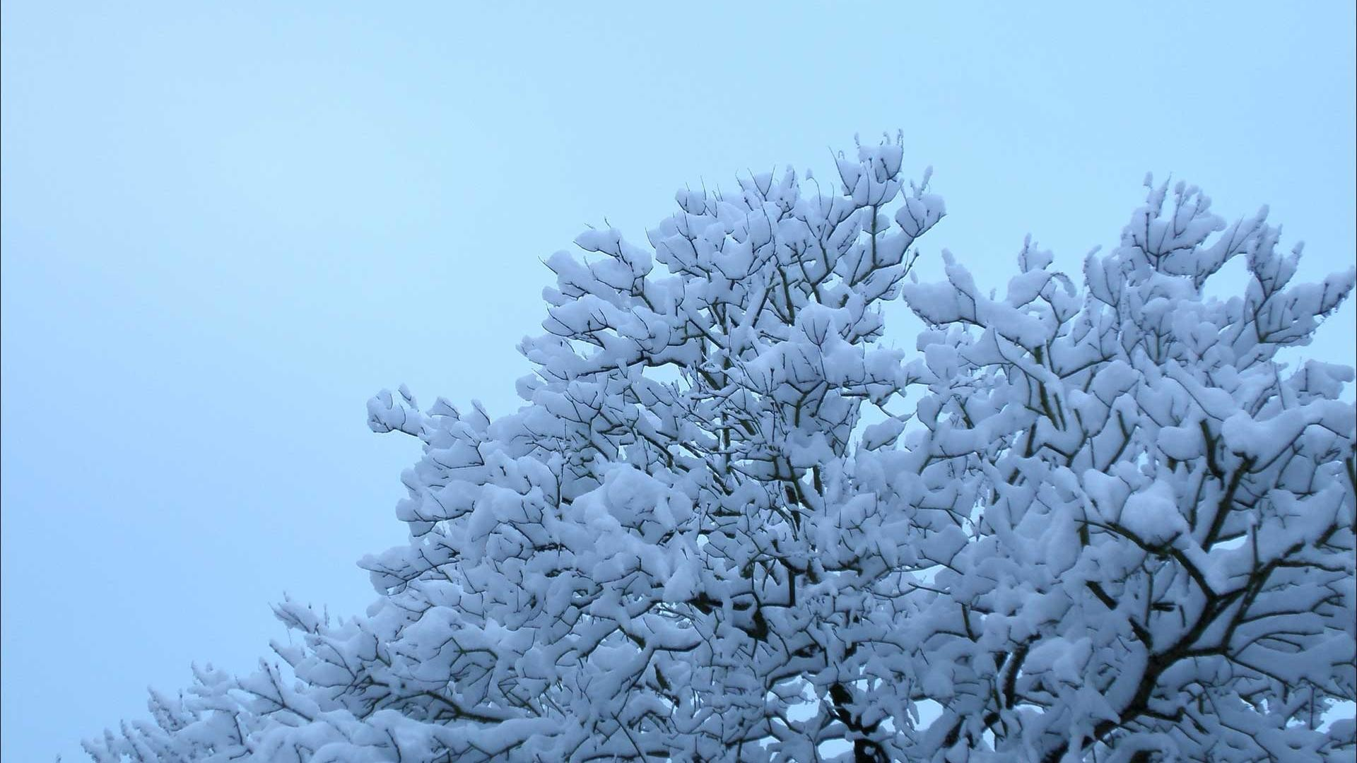 Cute tree full of snow in Winter backgrounds wide  wallpapers:1280×800,1440×900,