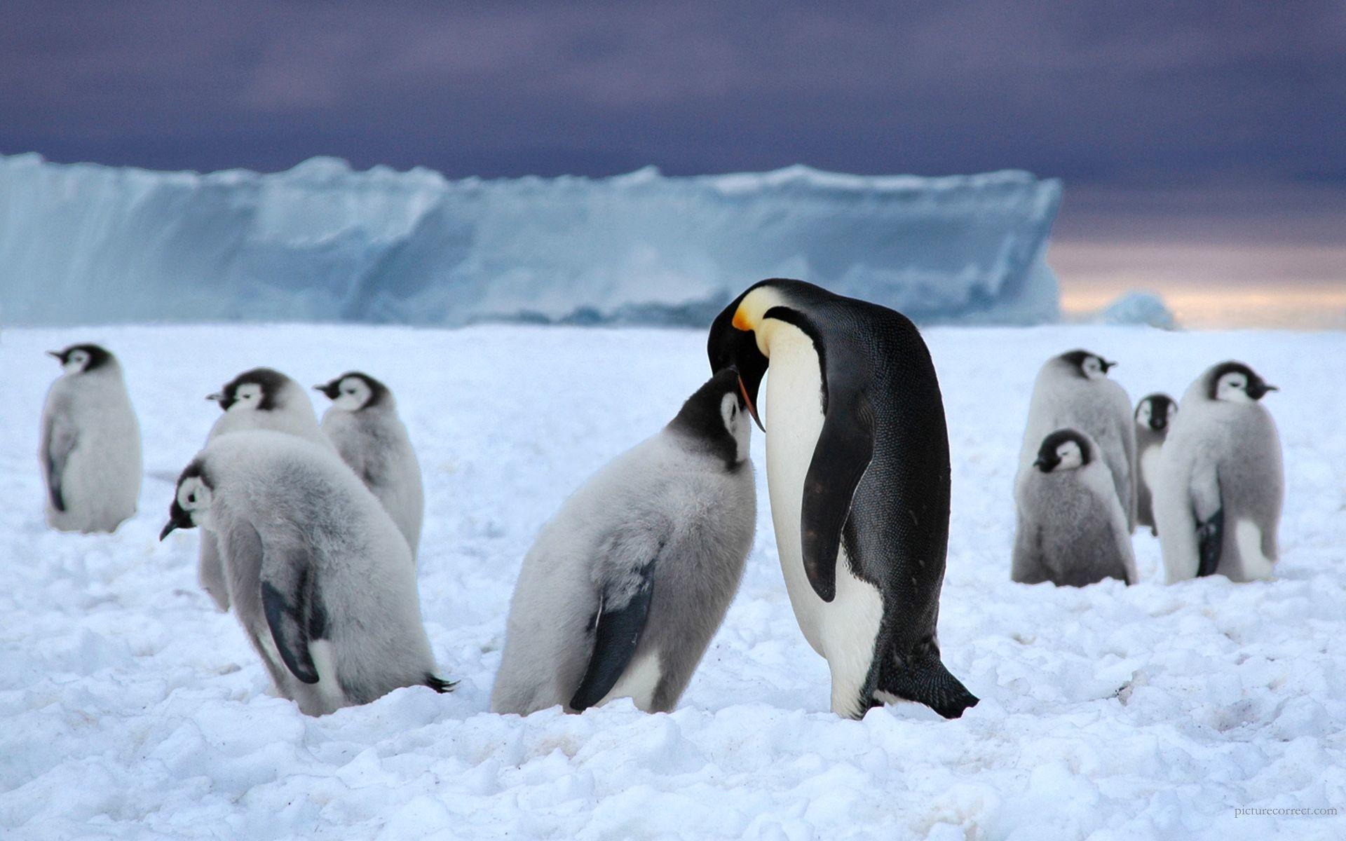 Cute Winter Penguin Background