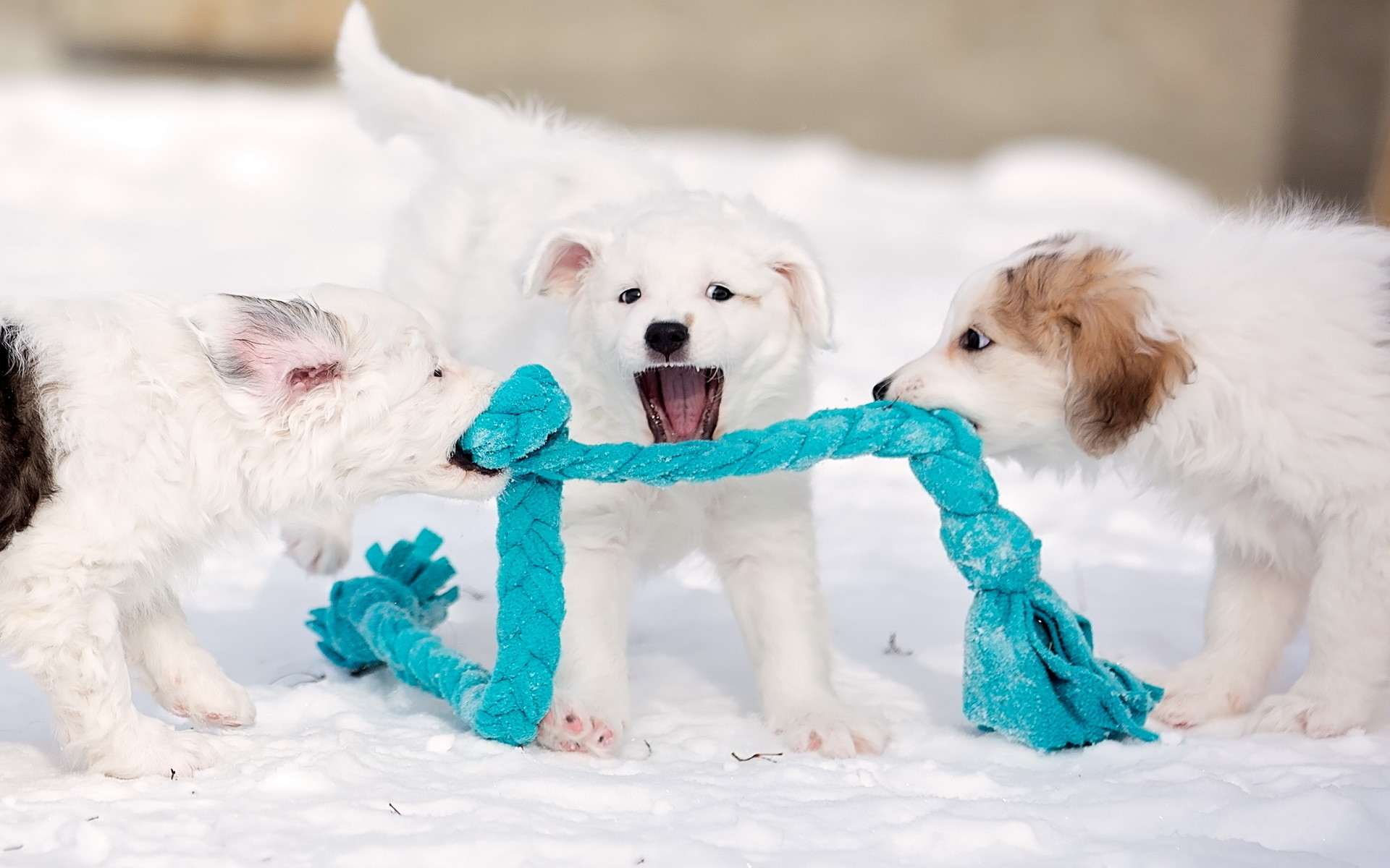 Cute Wallpapers Dogs Puppies
