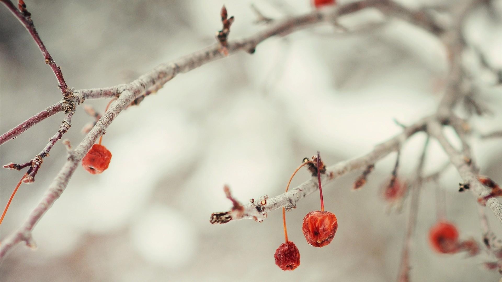 cute winter desktop wallpaper – www.wallpapers-in-hd.com