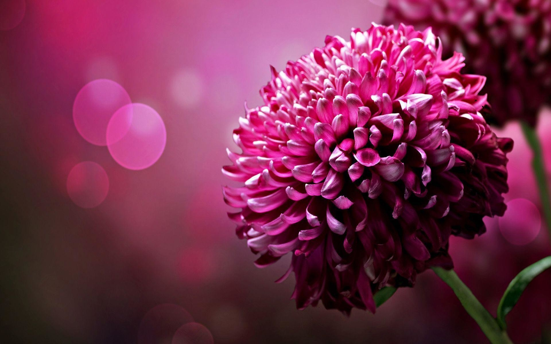 Wallpapers For > Pink Nature Background