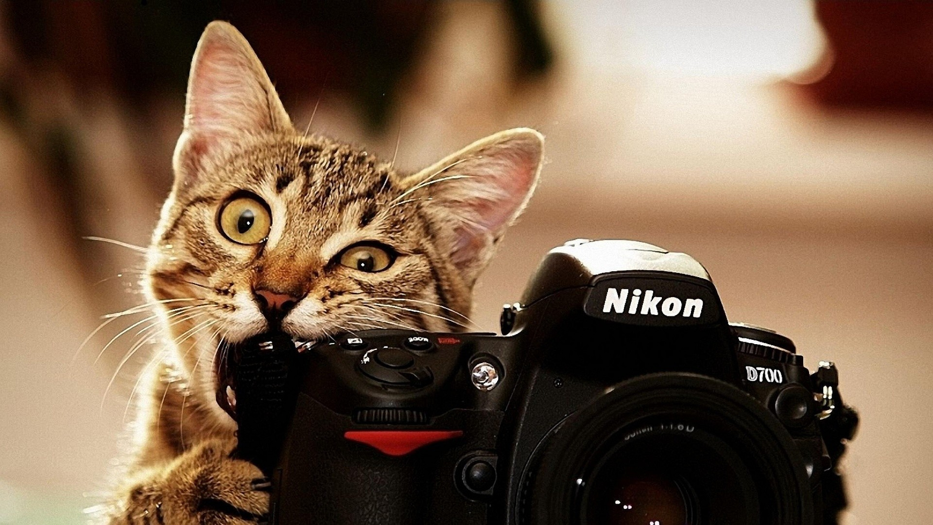 8. funny-wallpapers-hd9-600×338