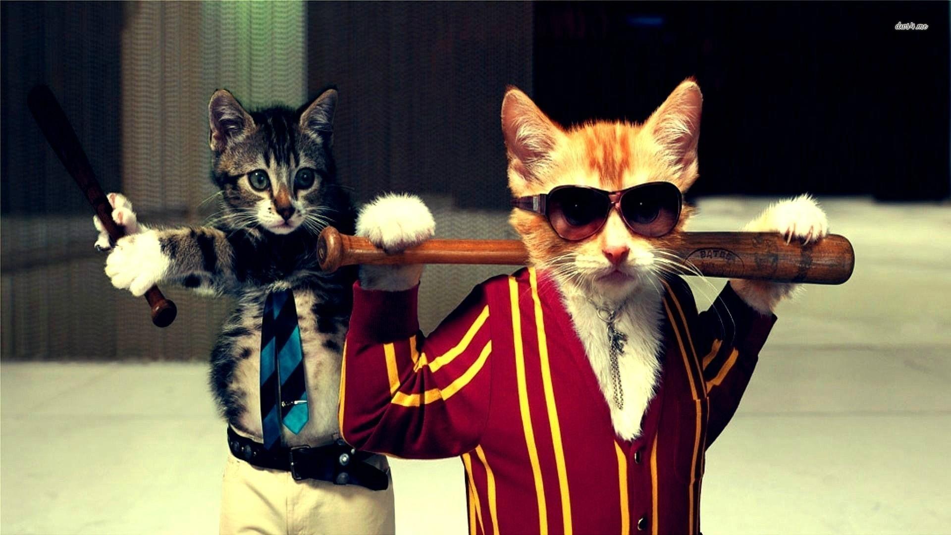 Cats Art Funny #Wallpaper