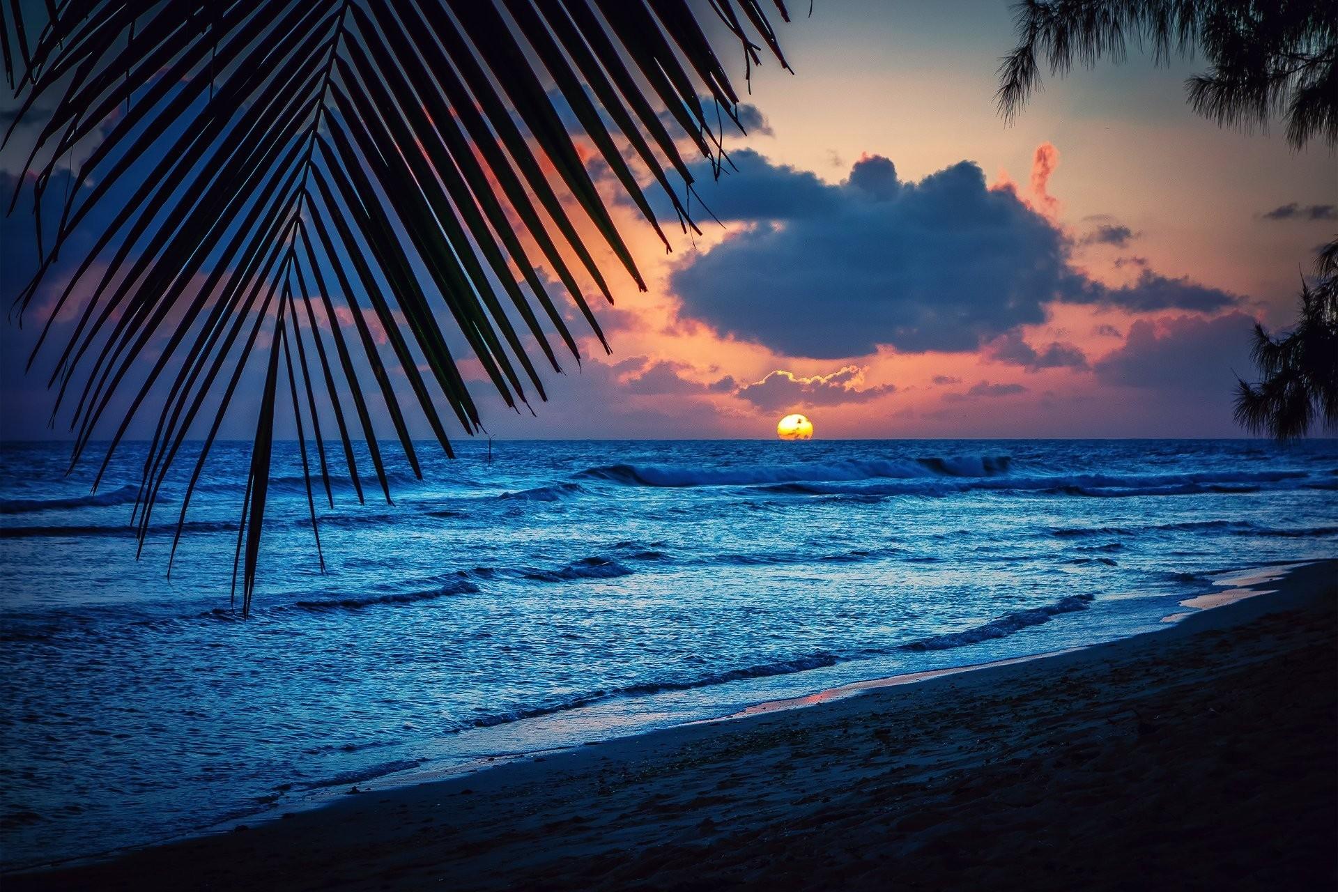 barbados caribbean night beach sunset sun palm sheet silhouette