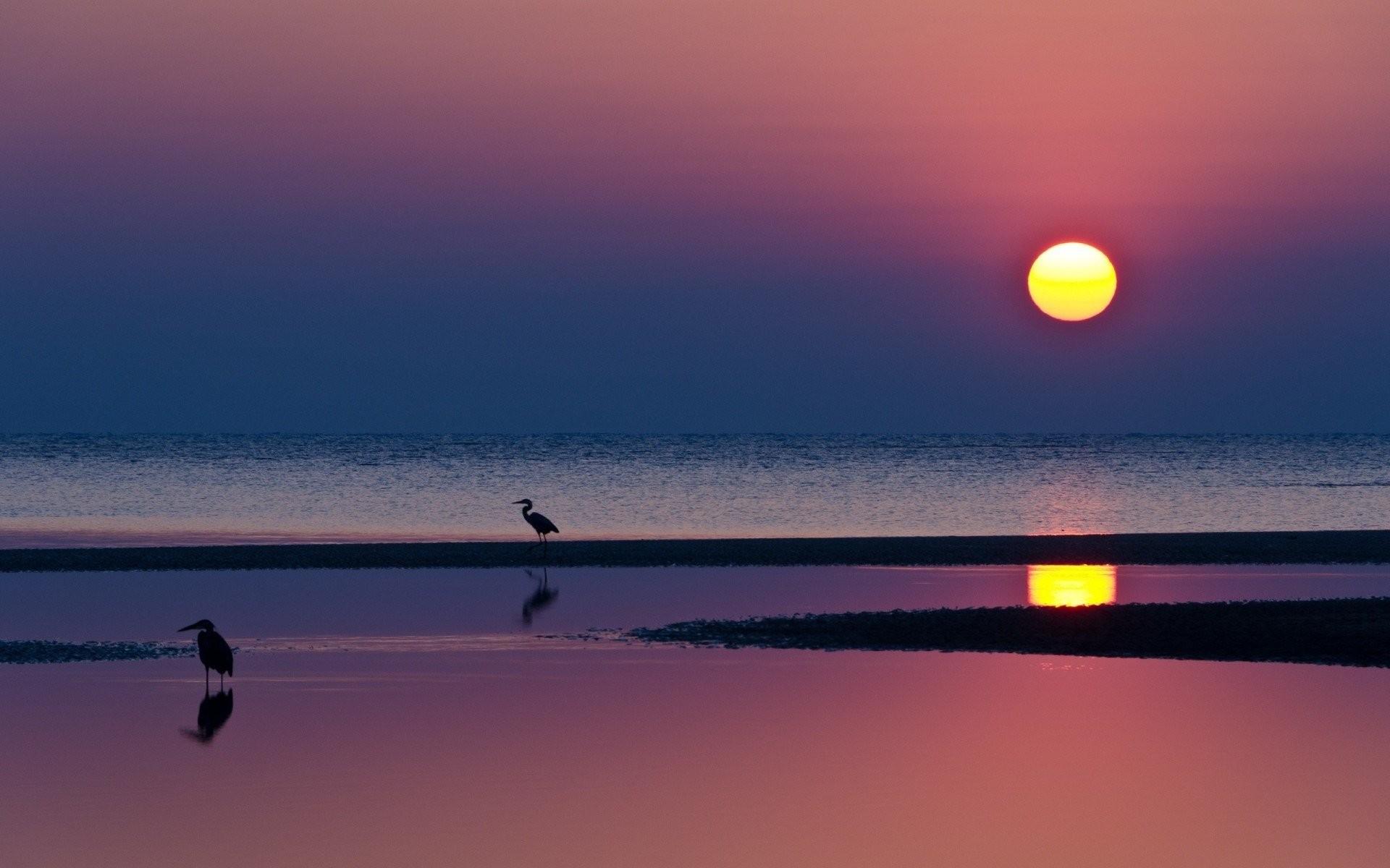 night beach sunset reflection water sun sea silhouettes heron horizon