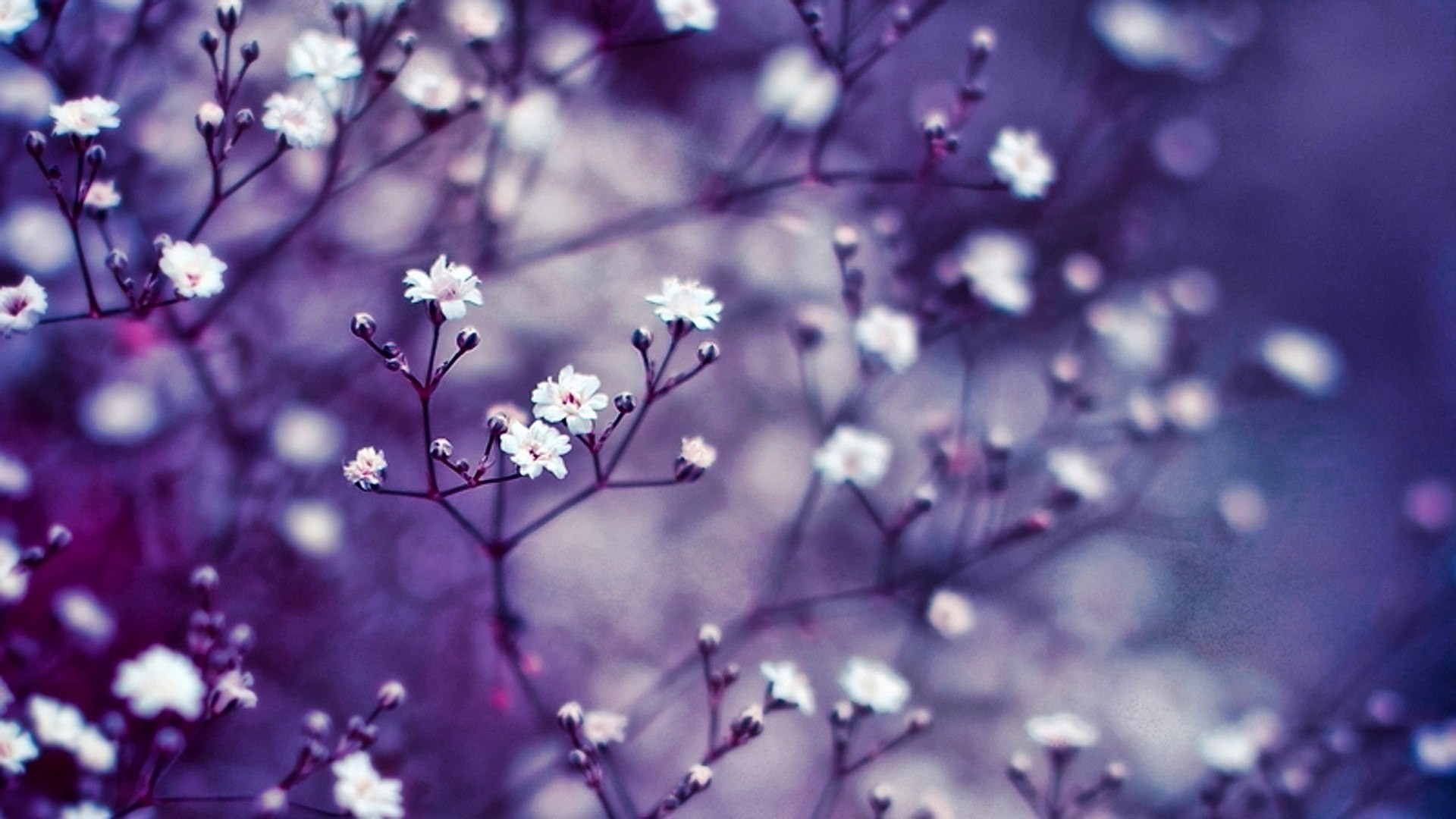 Flowers Images Hd Wallpaper
