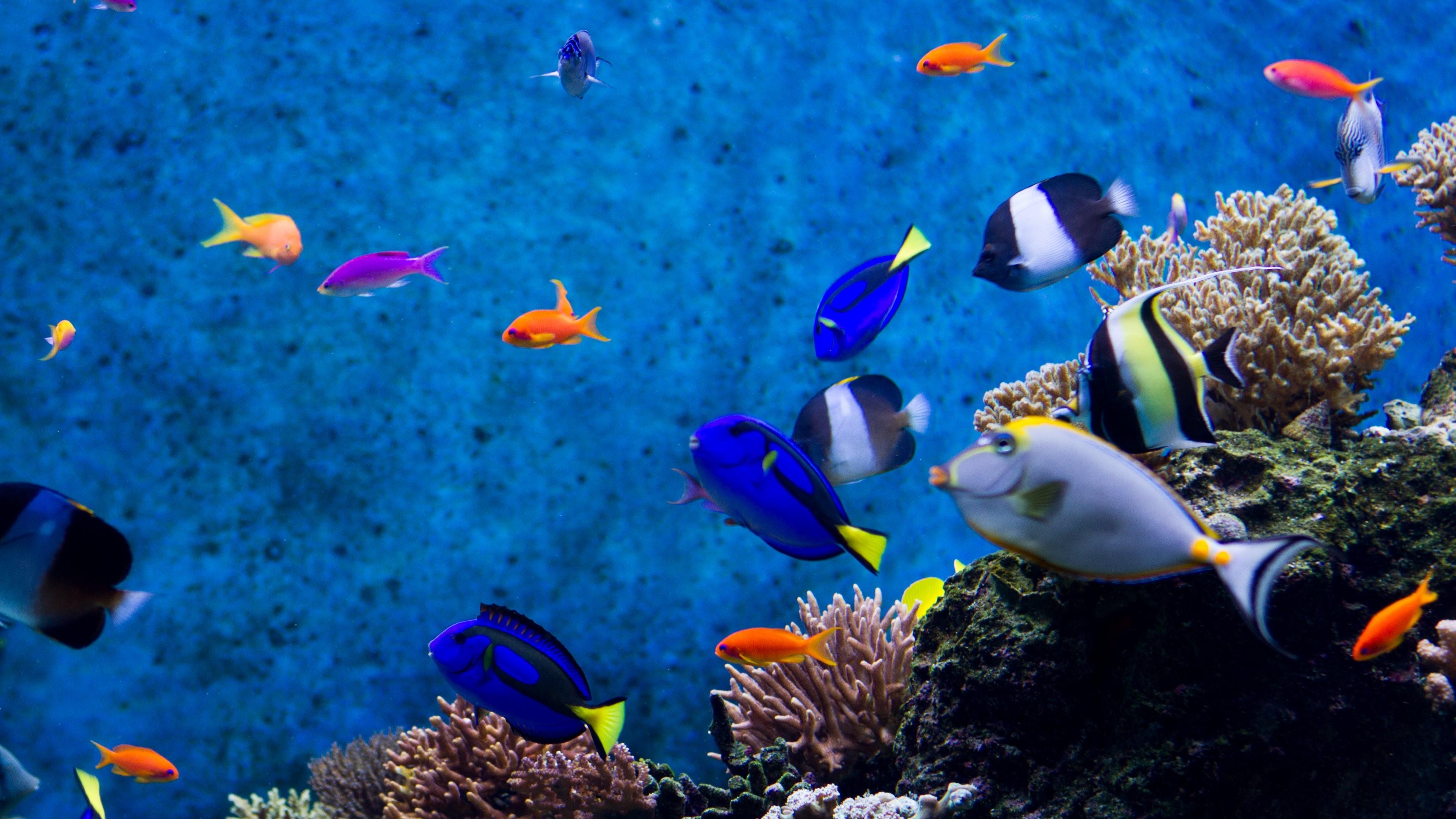 Aquarium Live Wallpaper For Desktop : Aquarium hd 1080p wallpaper  wallpapersafari