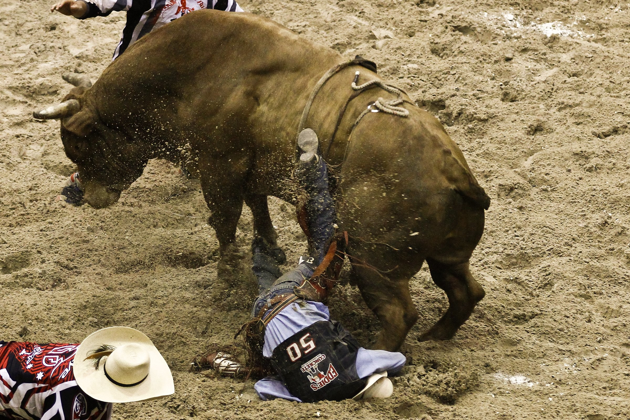 Bull riding bullrider rodeo western cowboy extreme cow (27 .