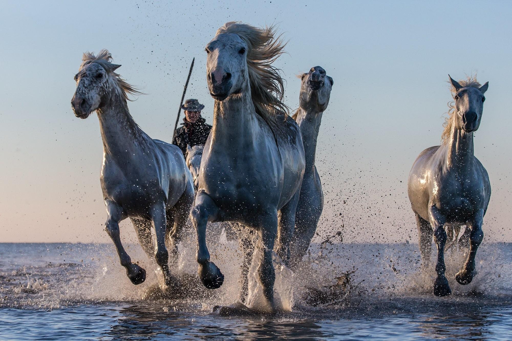 Indian Horse Wallpaper – WallpaperSafari