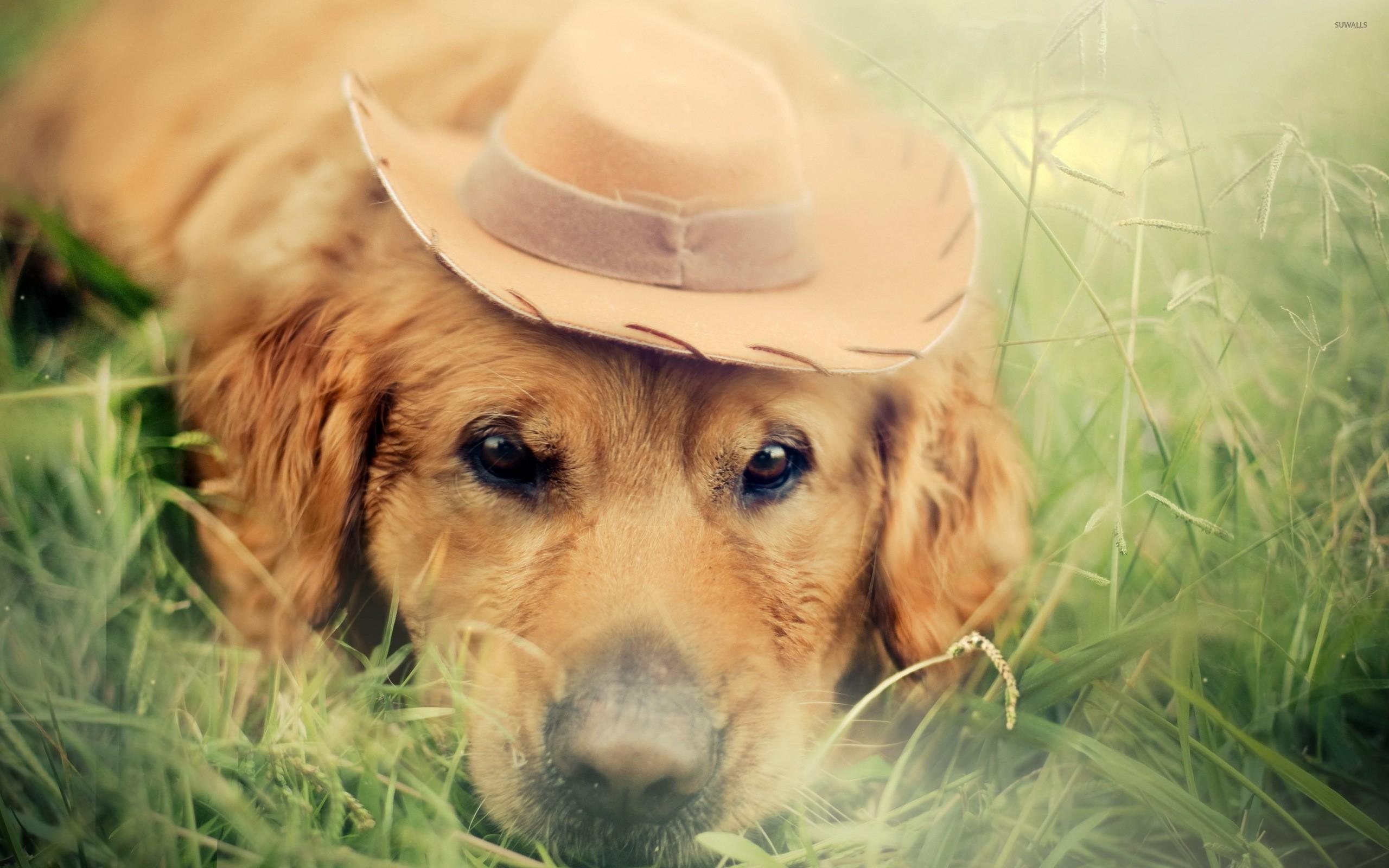 Free Western Cowboy Wallpaper – WallpaperSafari