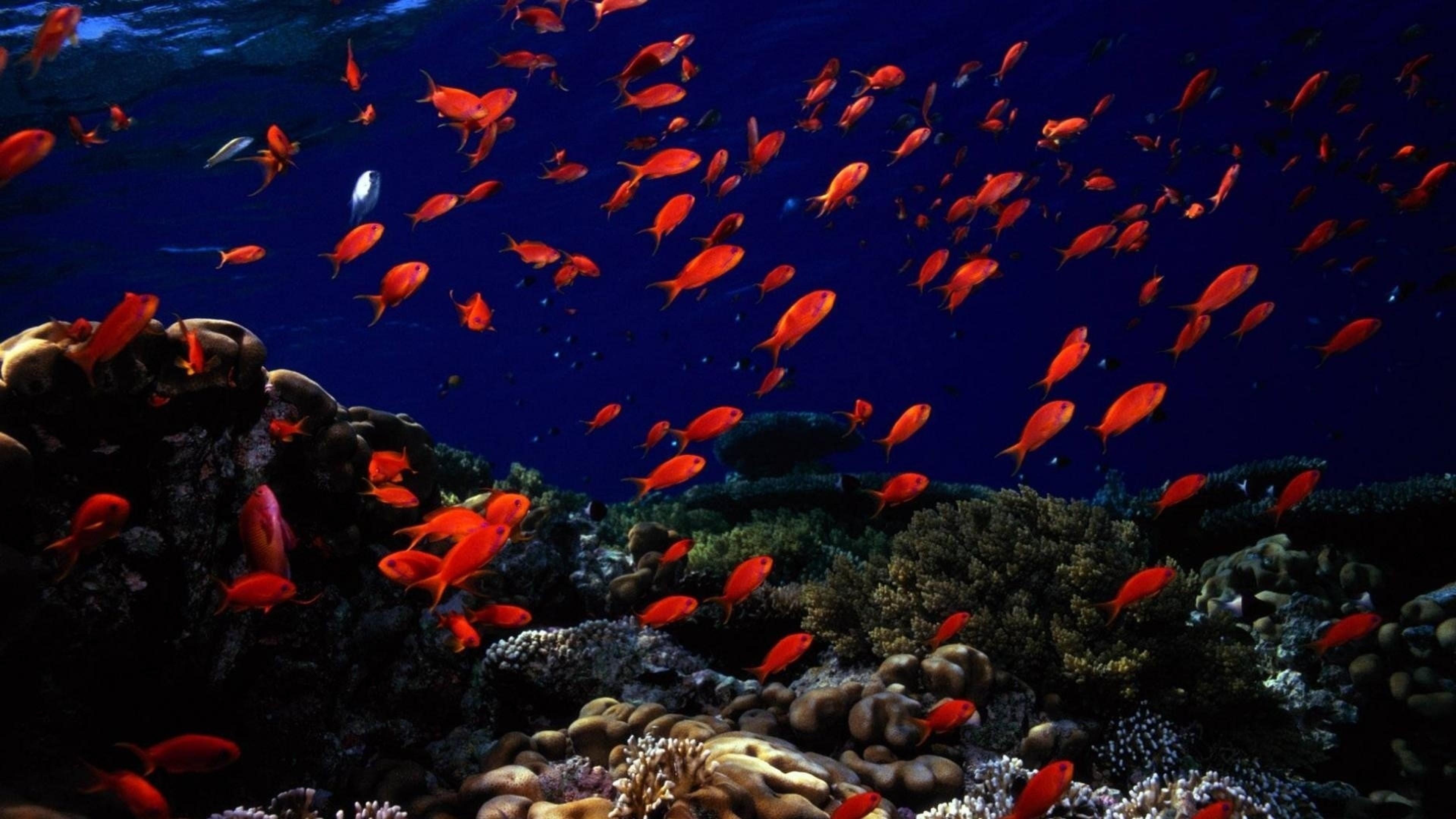Preview wallpaper underwater, fish, sea bottom 3840×2160