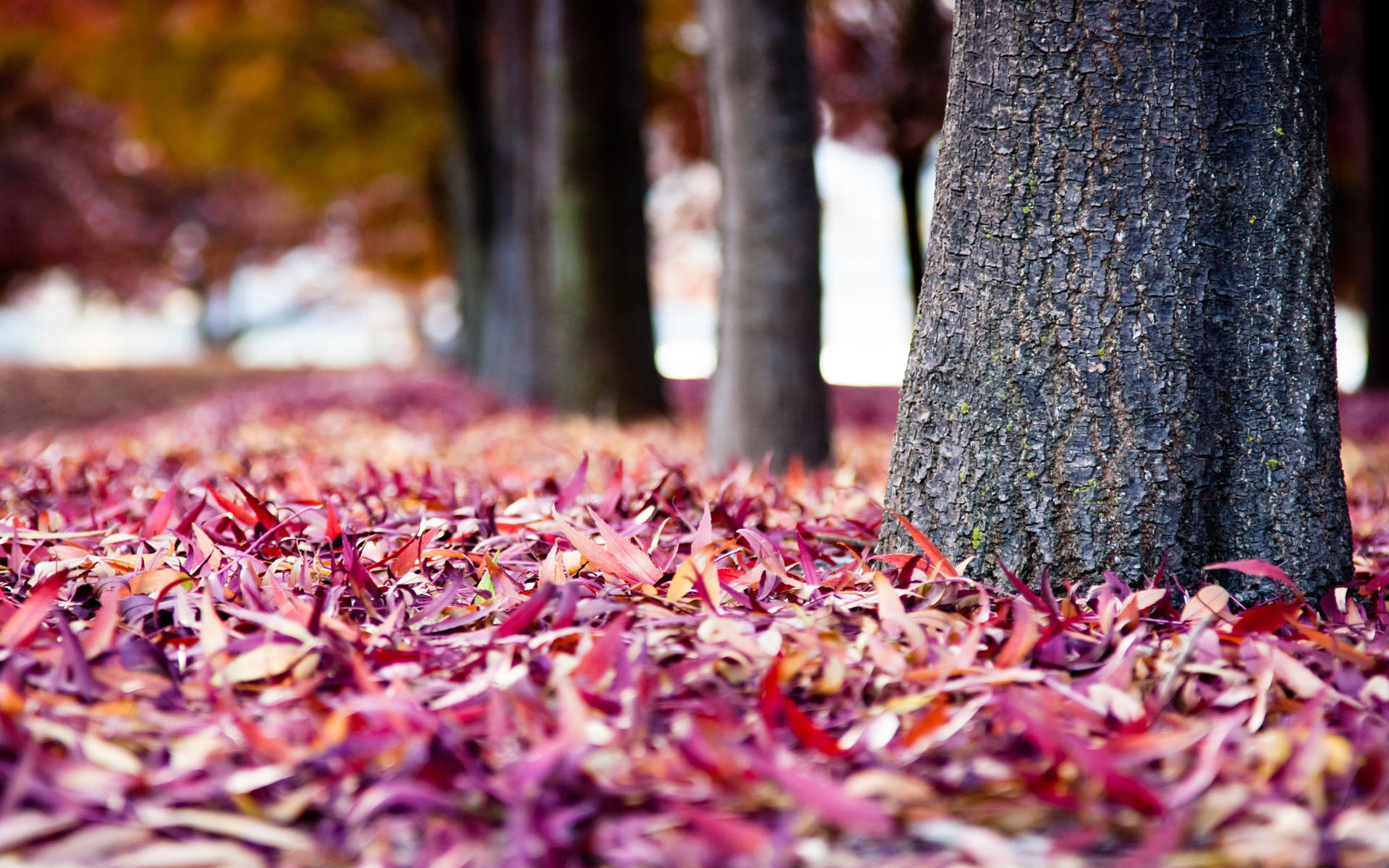 15 Lovely HD Leaves Wallpapers