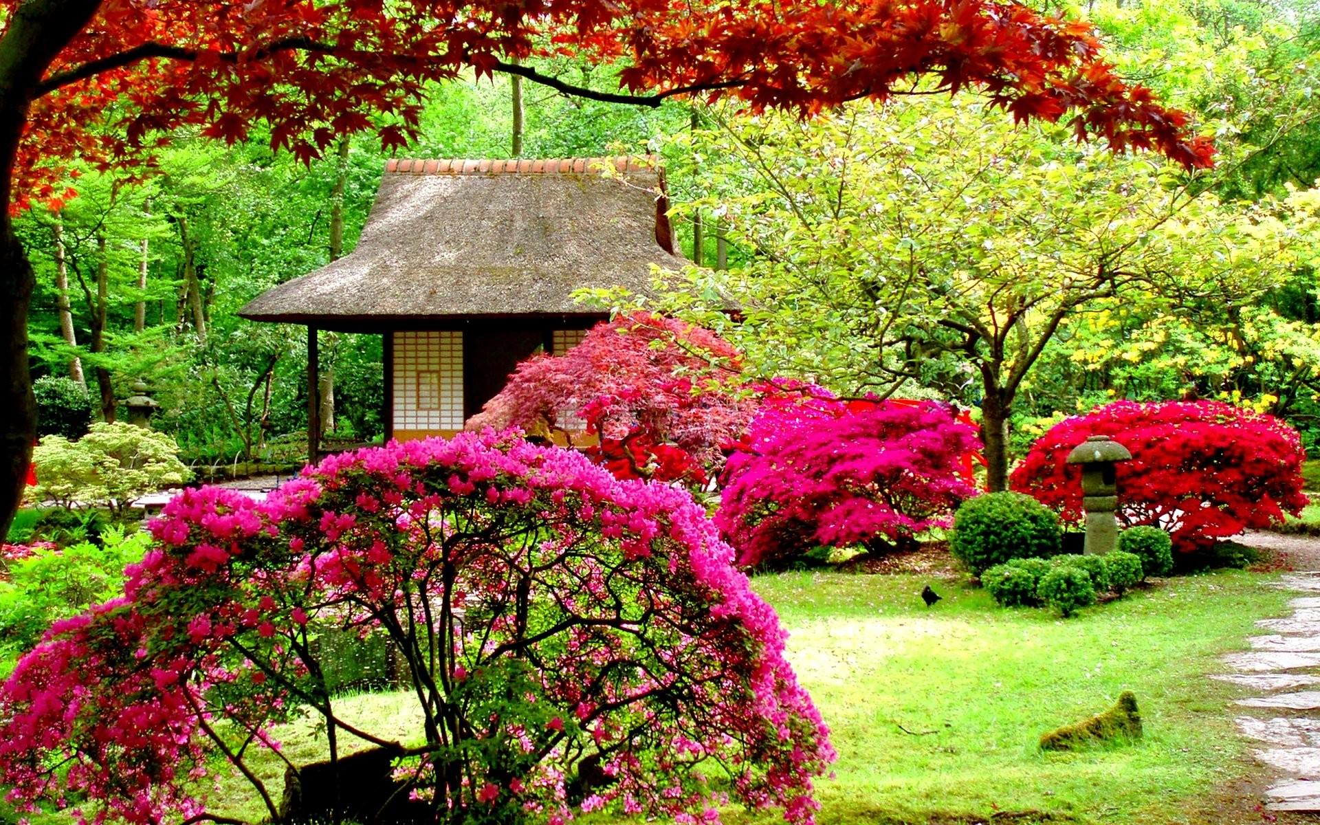 Beautiful Flowers Garden 724365 …