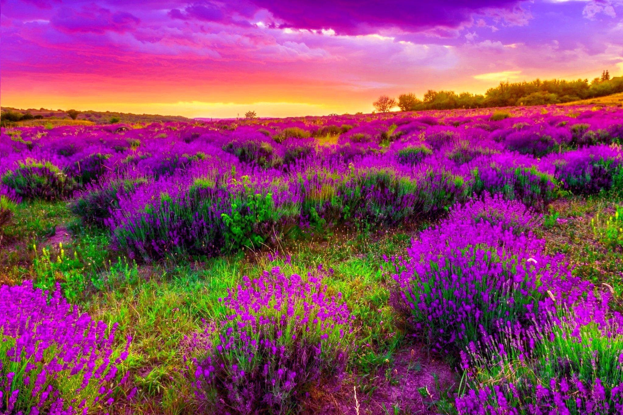 Beautiful Spring Background 19092 px ~ HDWallSource.
