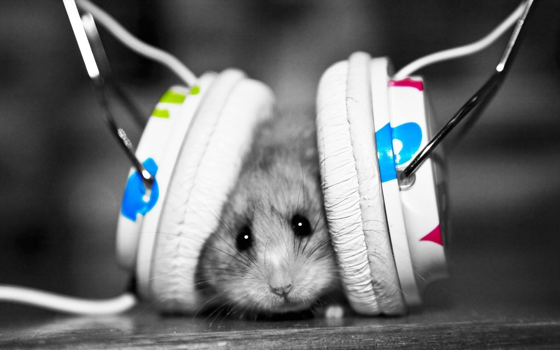 Wallpaper Weird Music Mouse