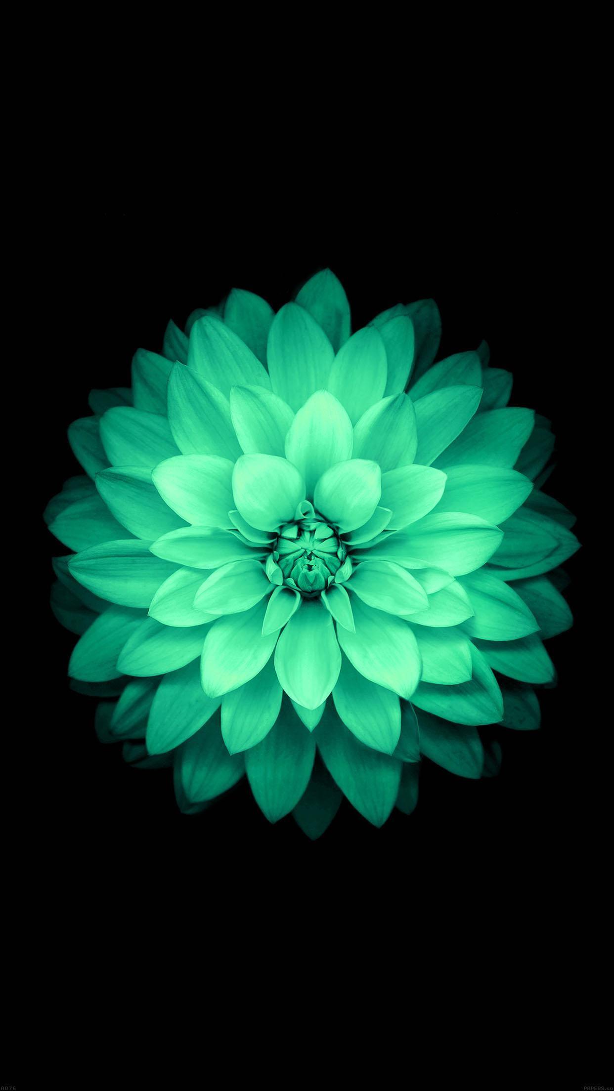 Apple Green Lotus Iphone6 Plus Ios8 Flower