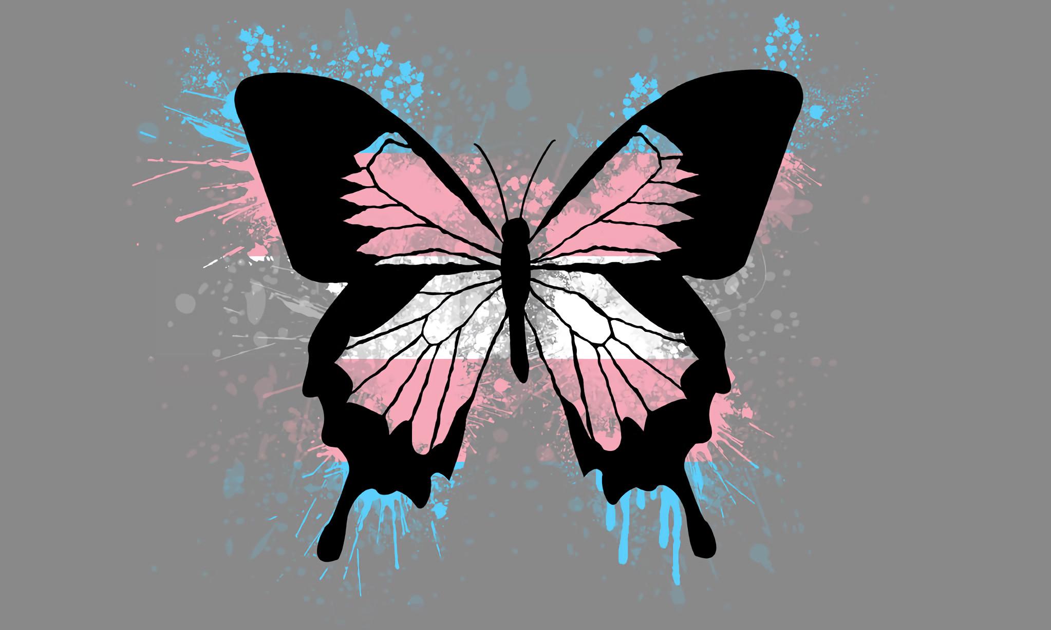 Transgender Butterfly [2046×1228] …