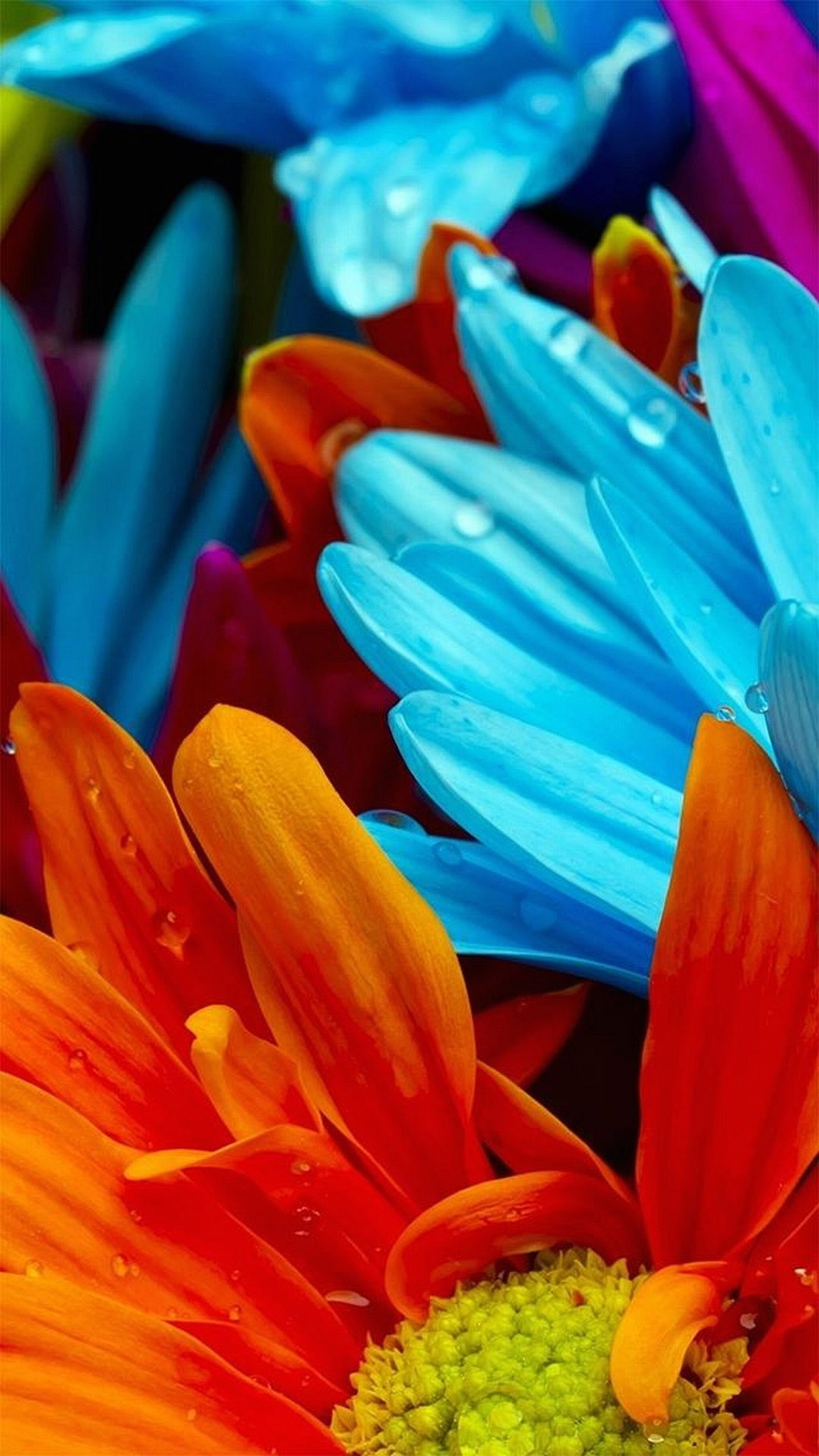 Colorful Flowers Wallpaper Galaxy S6, LG G4, HTC One M9