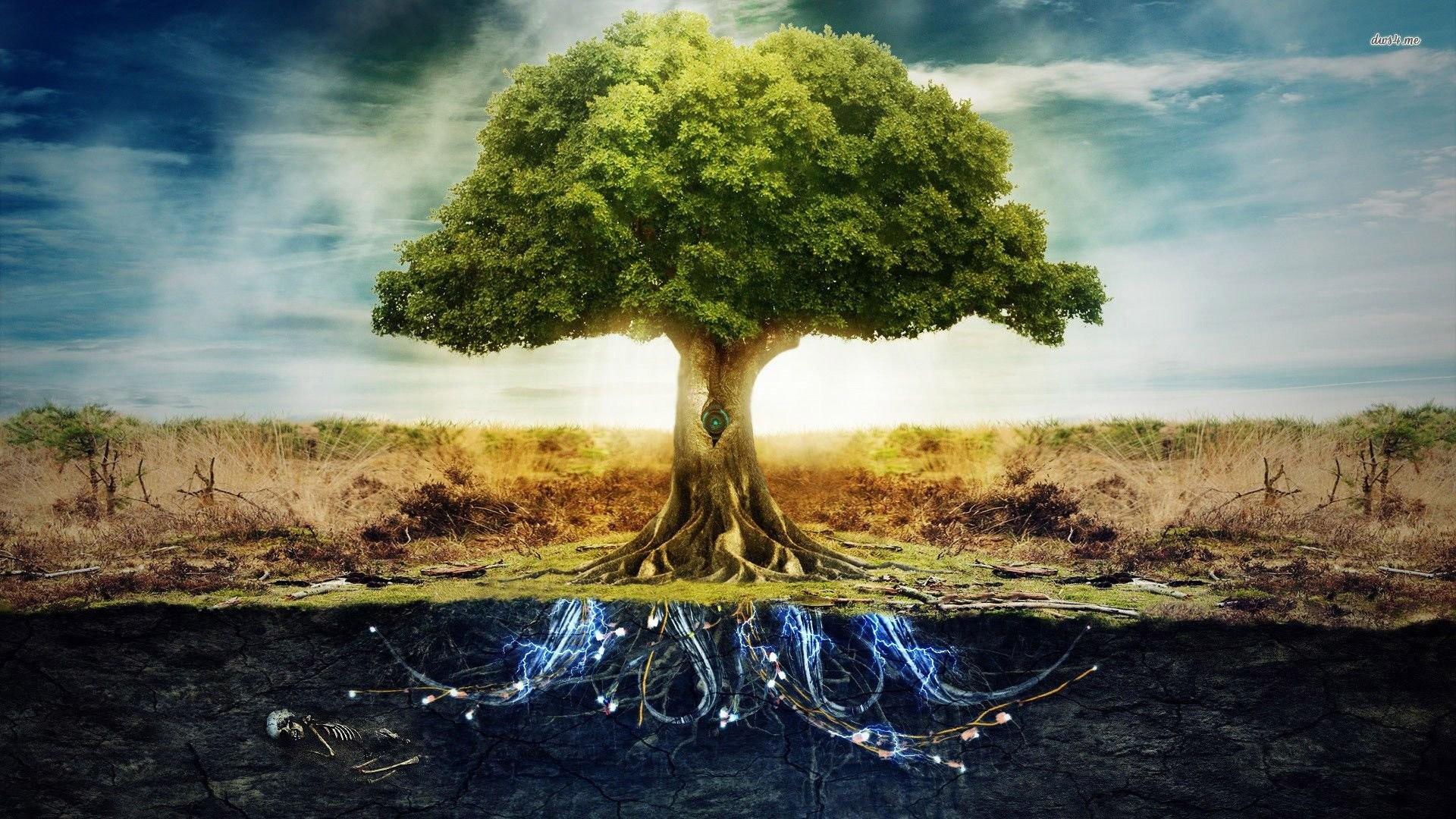 Tree of Life Wallpaper – Jason Matias Fine Art