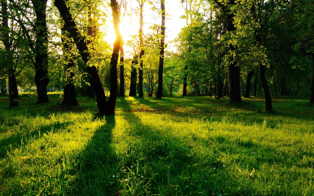Trees HD Wallpapers Backgrounds Wallpaper