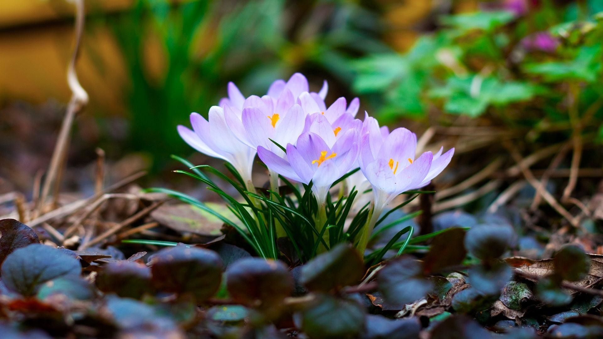 Free Spring Wallpapers And Screensavers Wallpaper Cave
