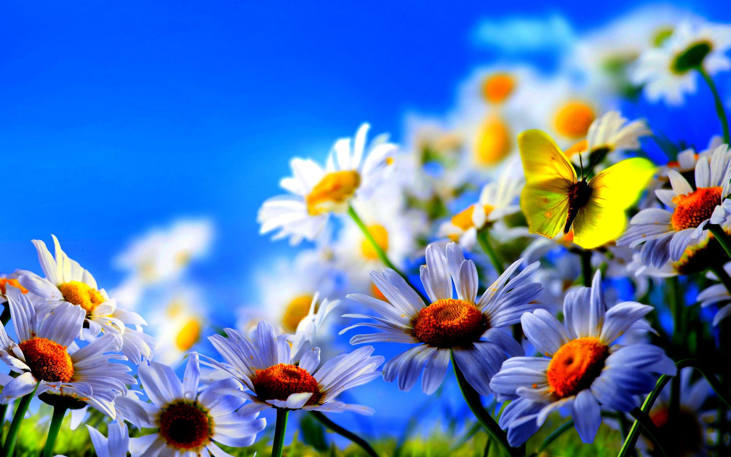 Home > Nature > Flowers & Plants > Spring flowers screensavers