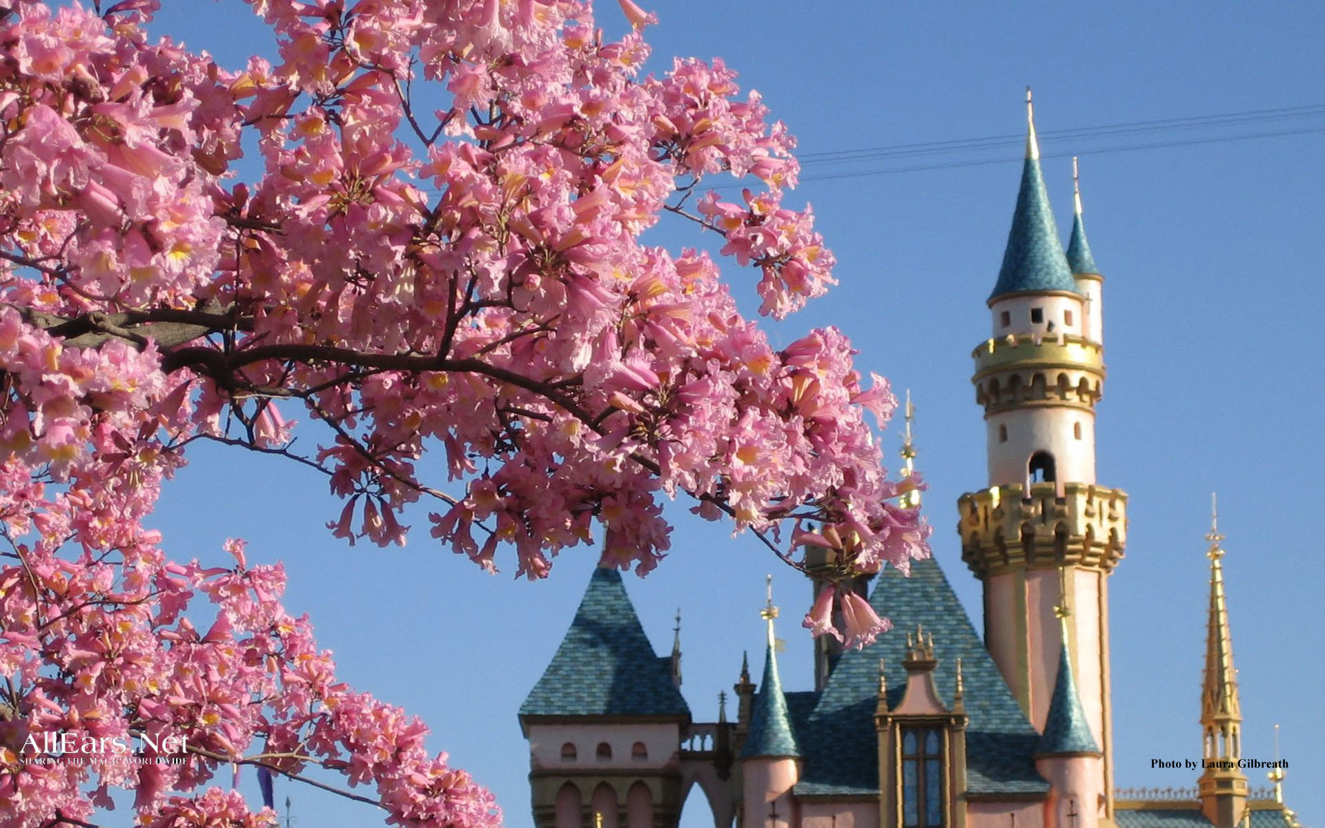 Sleeping Beauty Castle with Ice Lighting