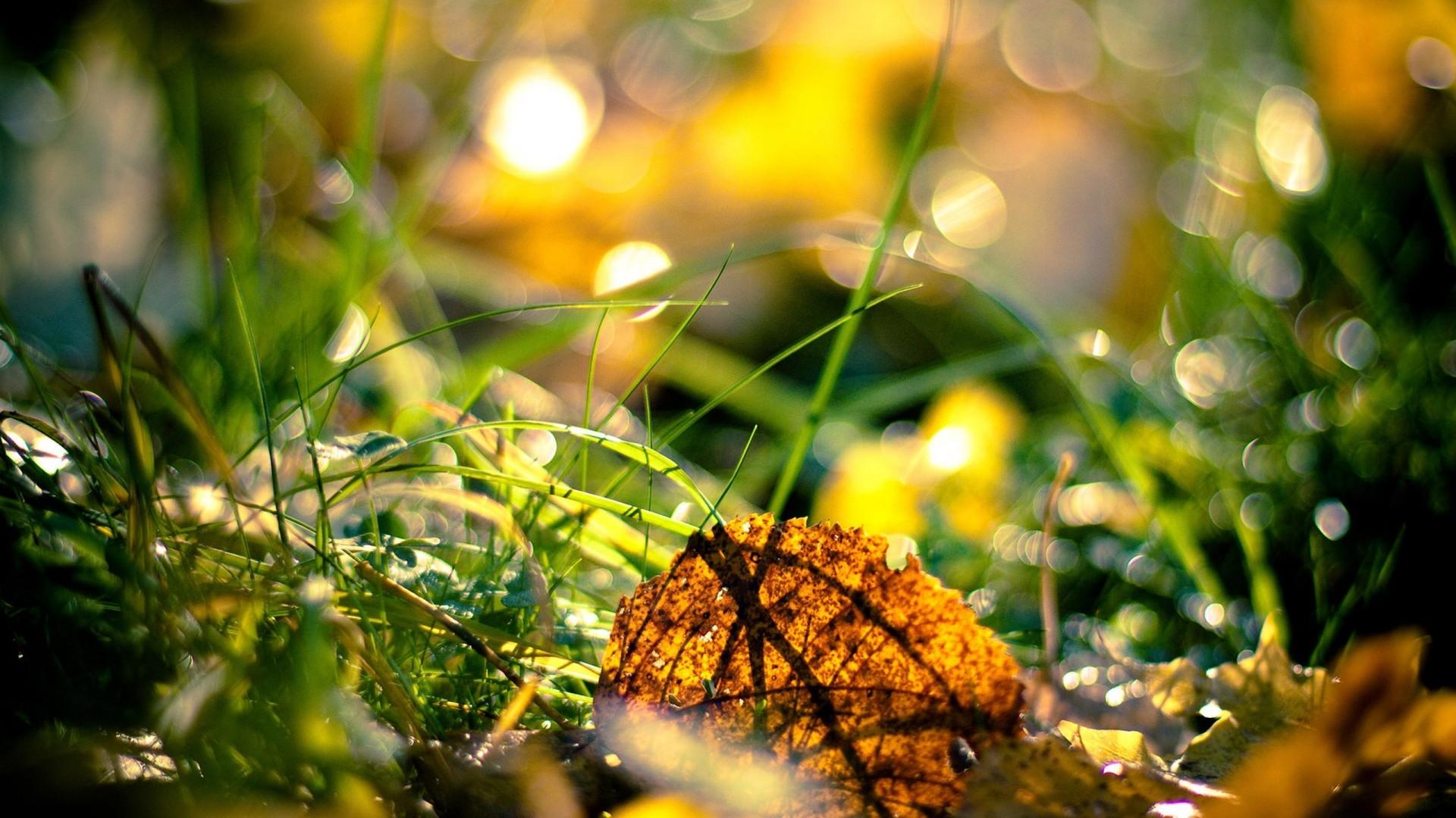 Autumn fresh season 1080p hd pictures nature.