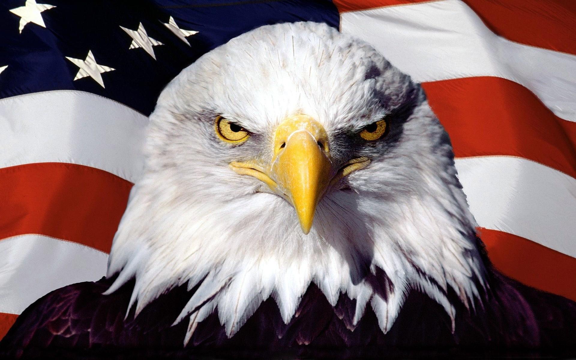 0 American Eagle Wallpapers American Eagle Wallpapers