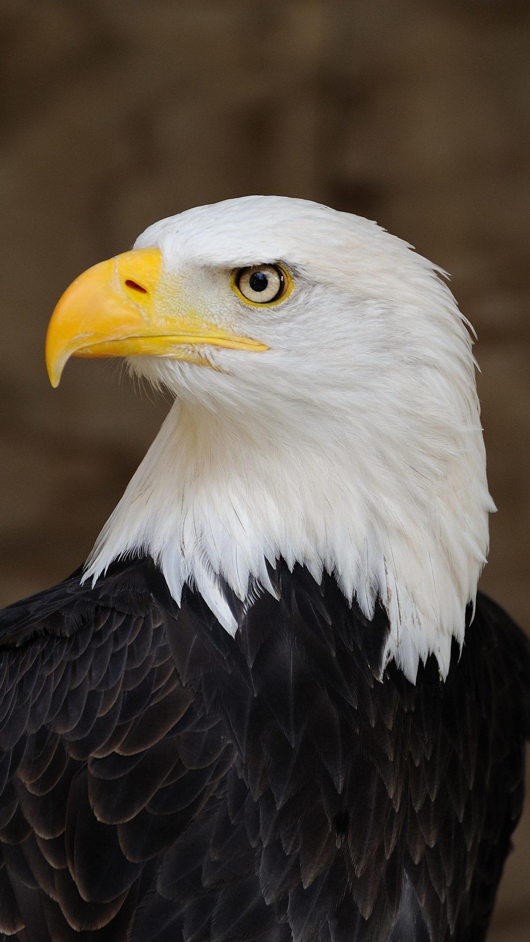 Wallpaper full hd 1080 x 1920 smartphone eagle america symbol