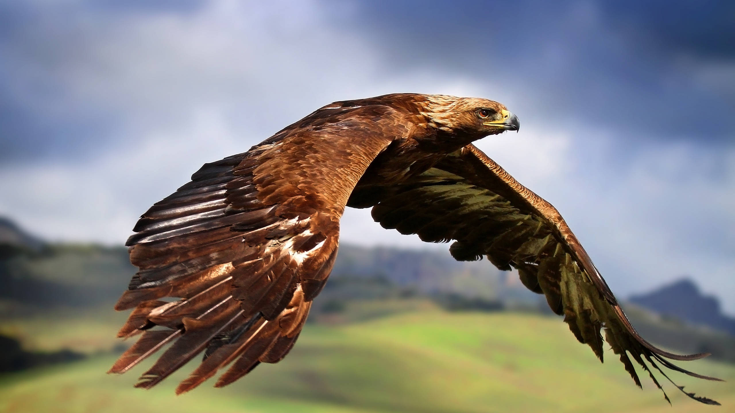 Wallpaper Eagle in Fight [1920×1080]   High Quality Wallpapers   Pinterest    Bald eagles