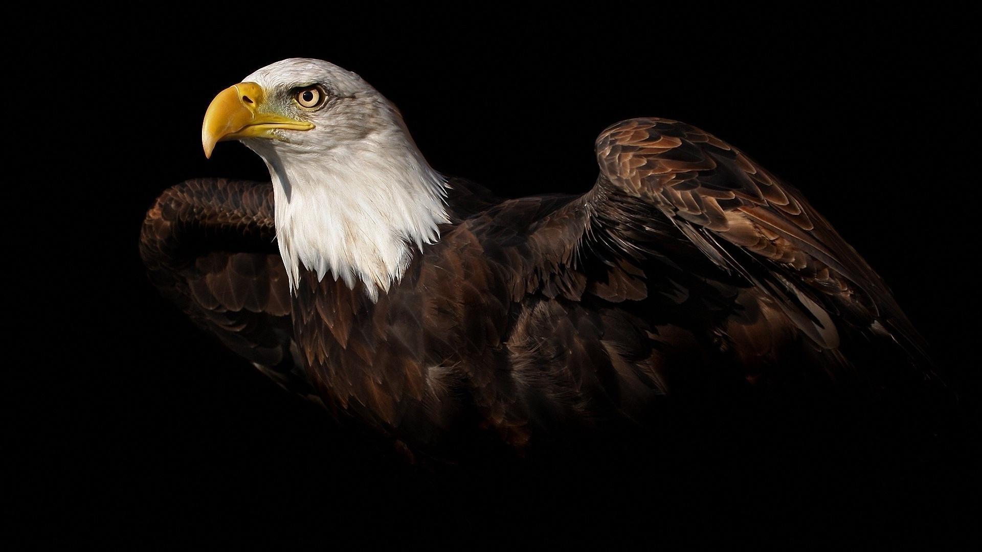 Free <b>Patriotic</b> Pictures   Free <b>Eagles