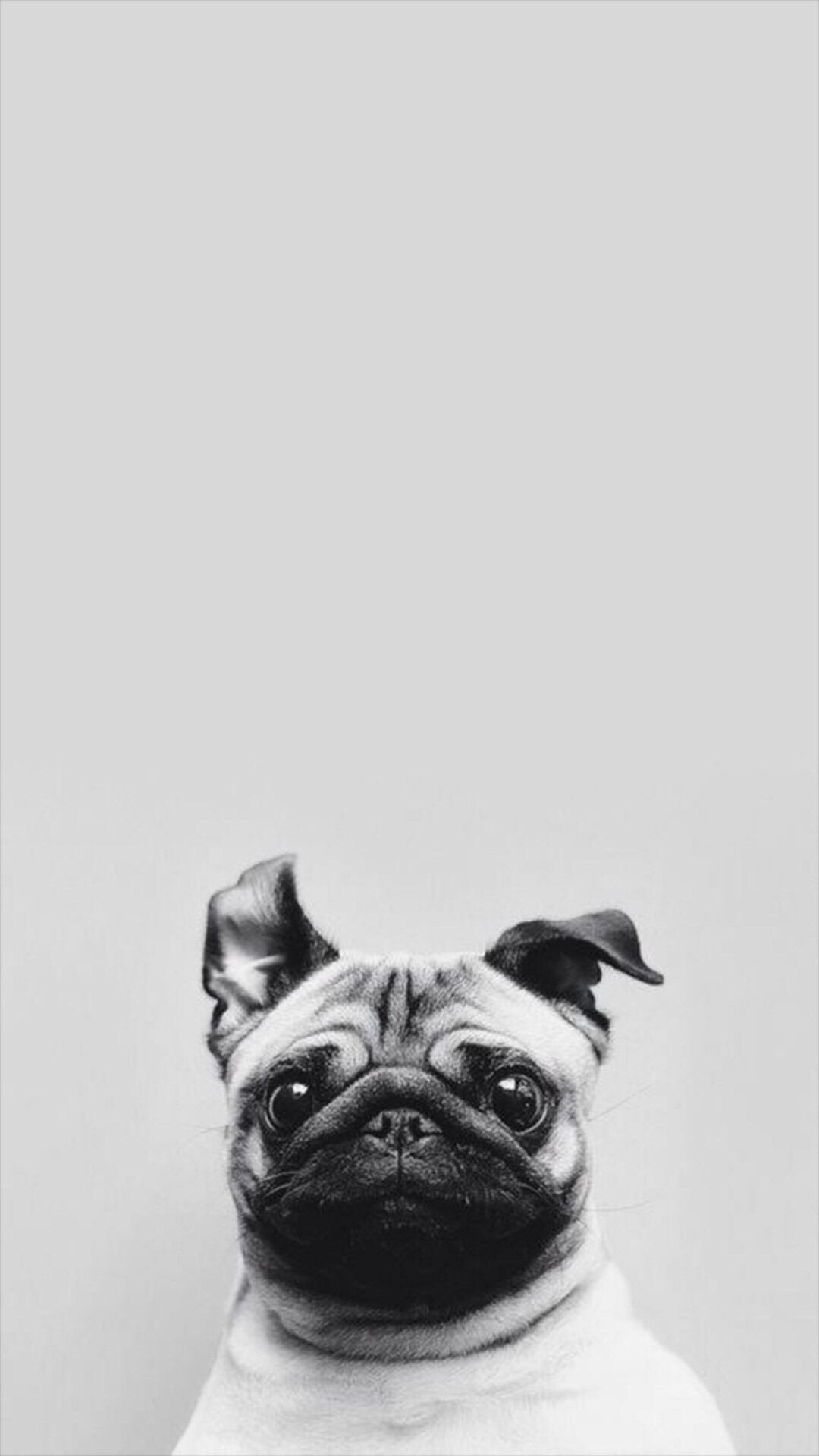 … funny puppy dog simple macro iphone 8 wallpaper download iphone …