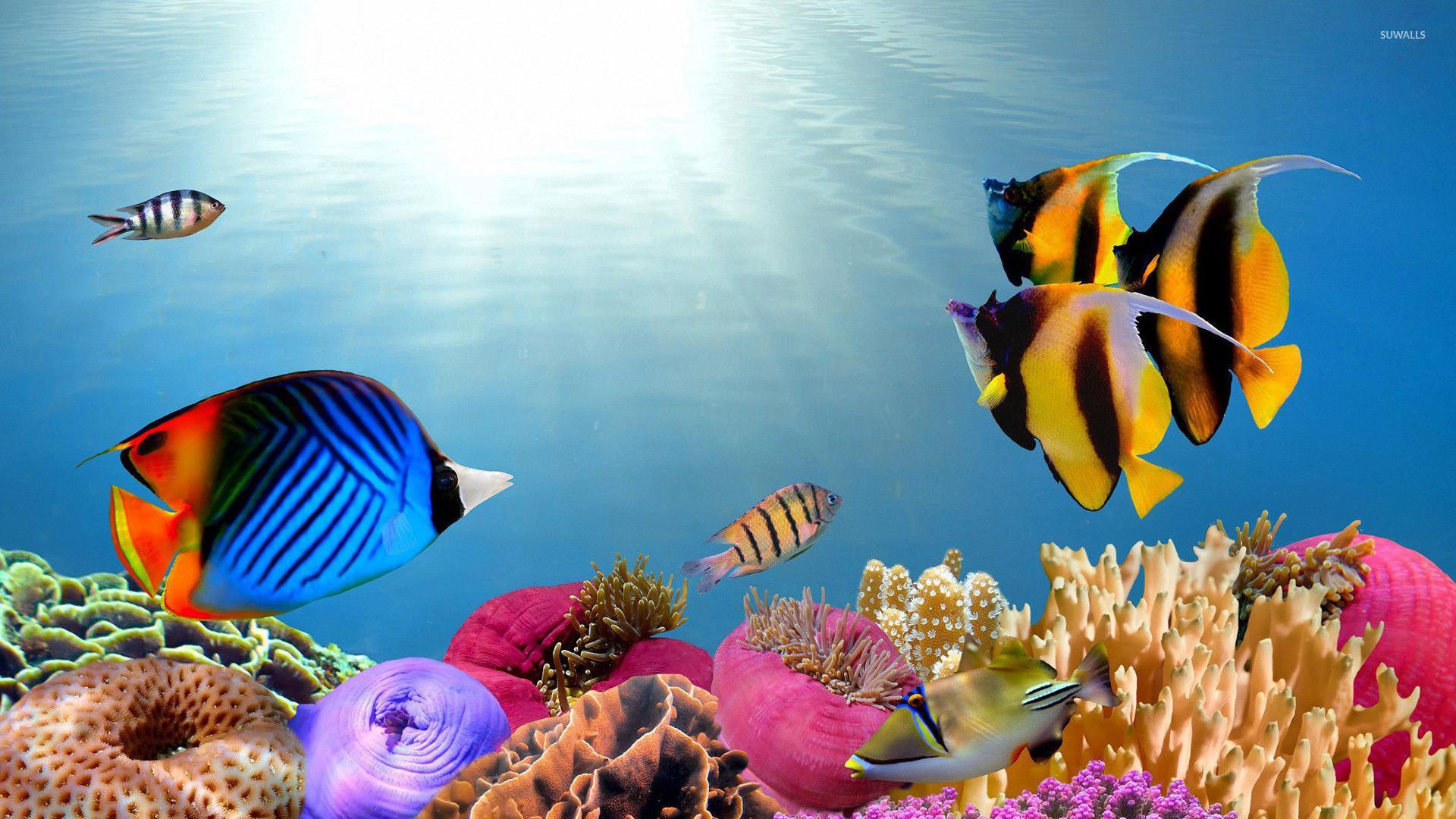 Saltwater Fishing Wallpaper Desktop – WallpaperSafari