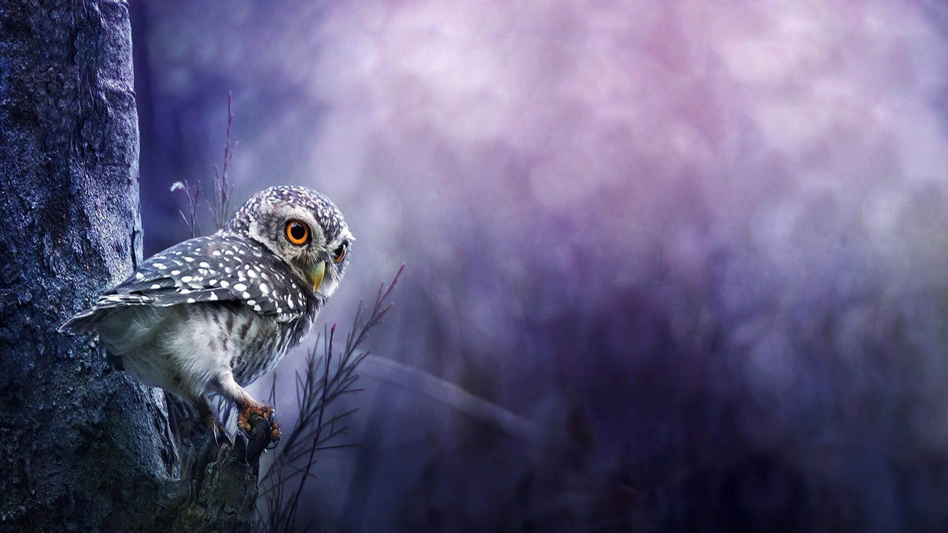 very cute baby owl hd wallpaper. child