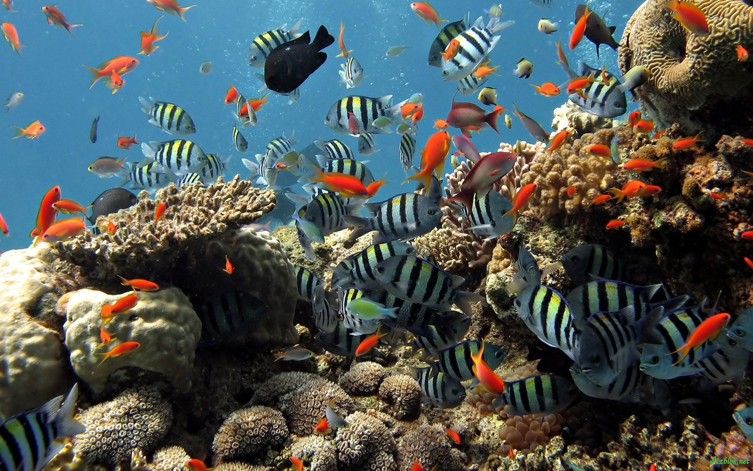 Aquarium Backgrounds (PC, Mobile, Gadgets) Compatible | px