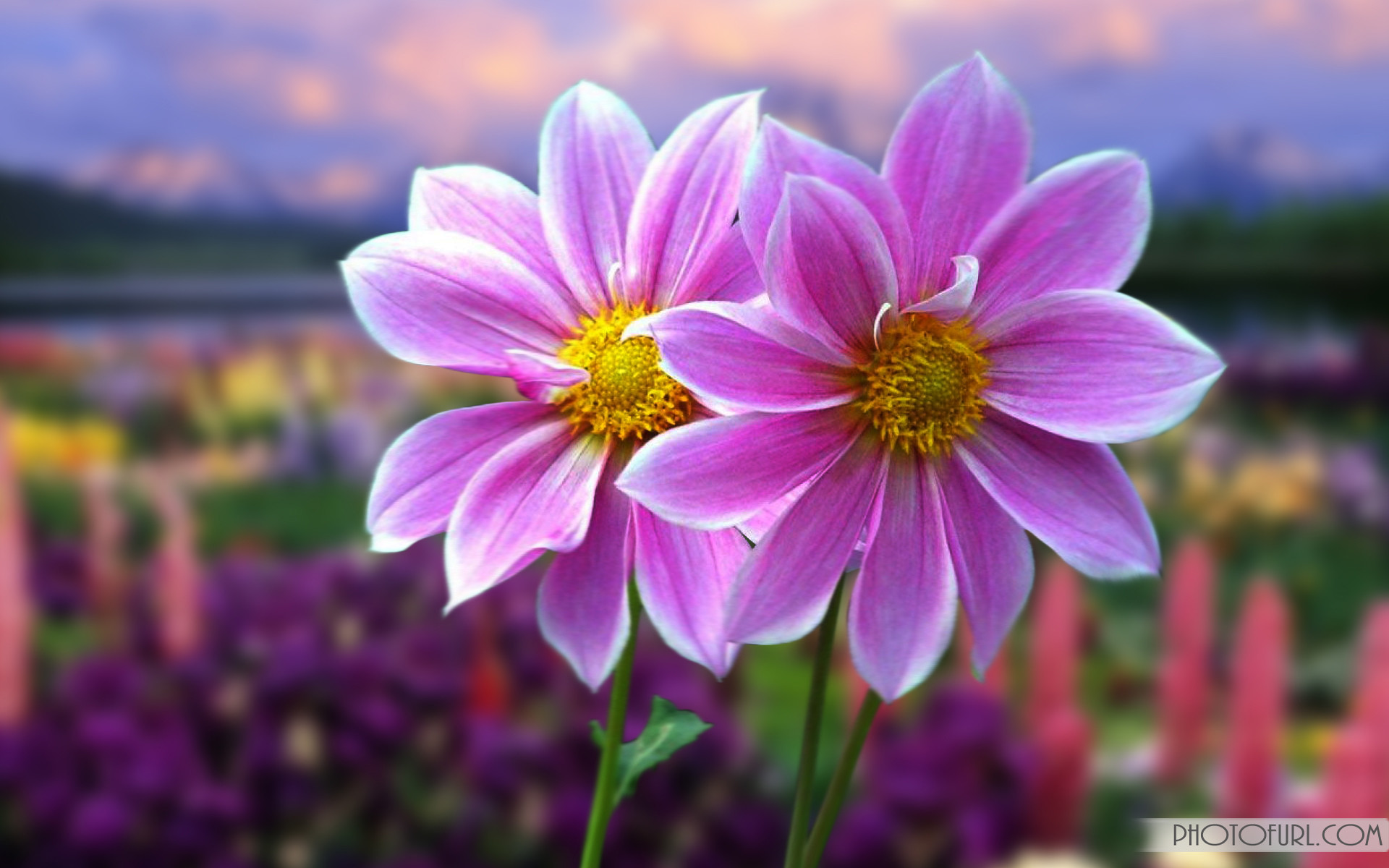 Animated Flower Laptop Computer Screen Laptops HD Wallpapers .