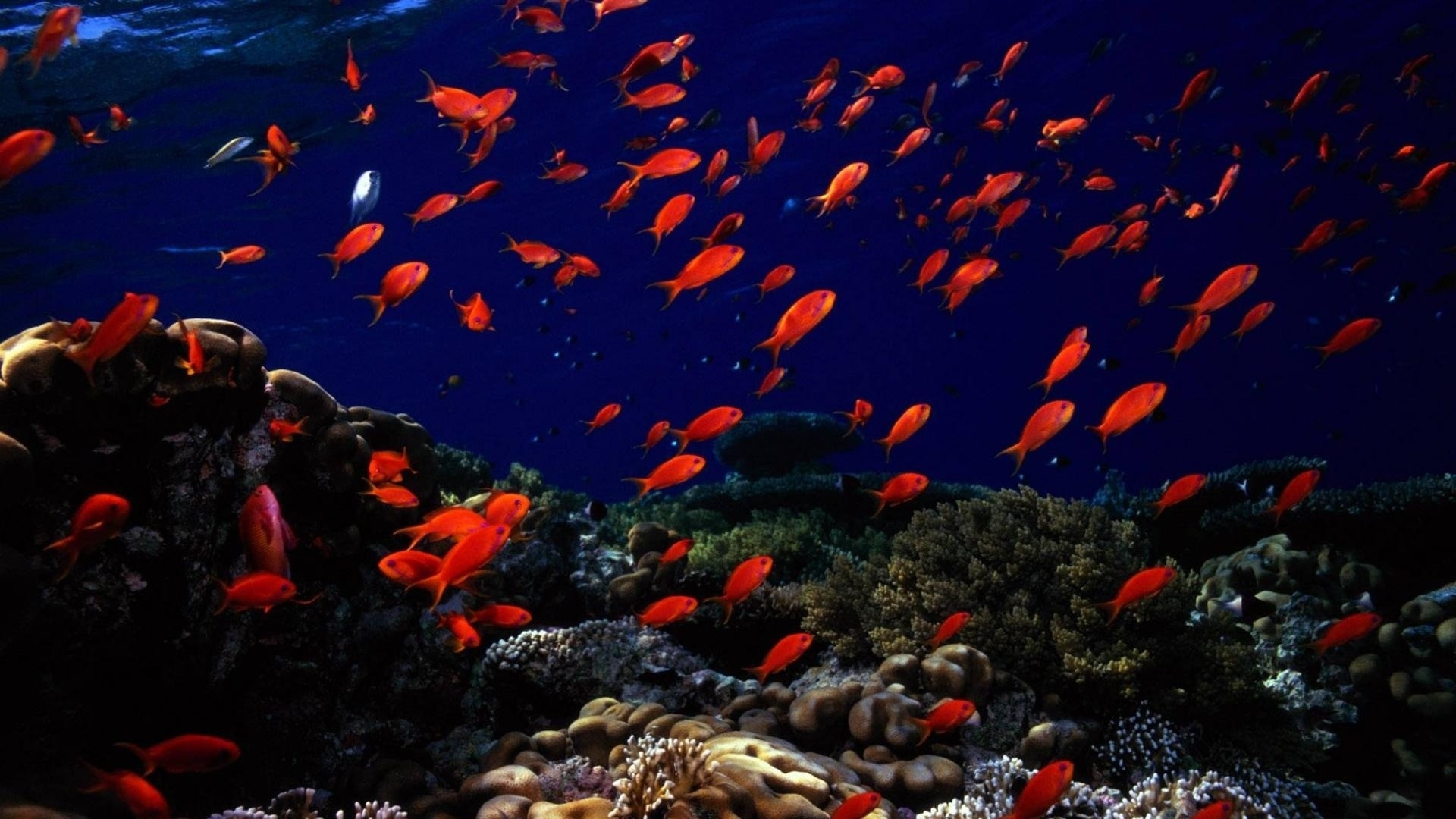 … Background 4K Ultra HD. Wallpaper underwater, fish, sea bottom