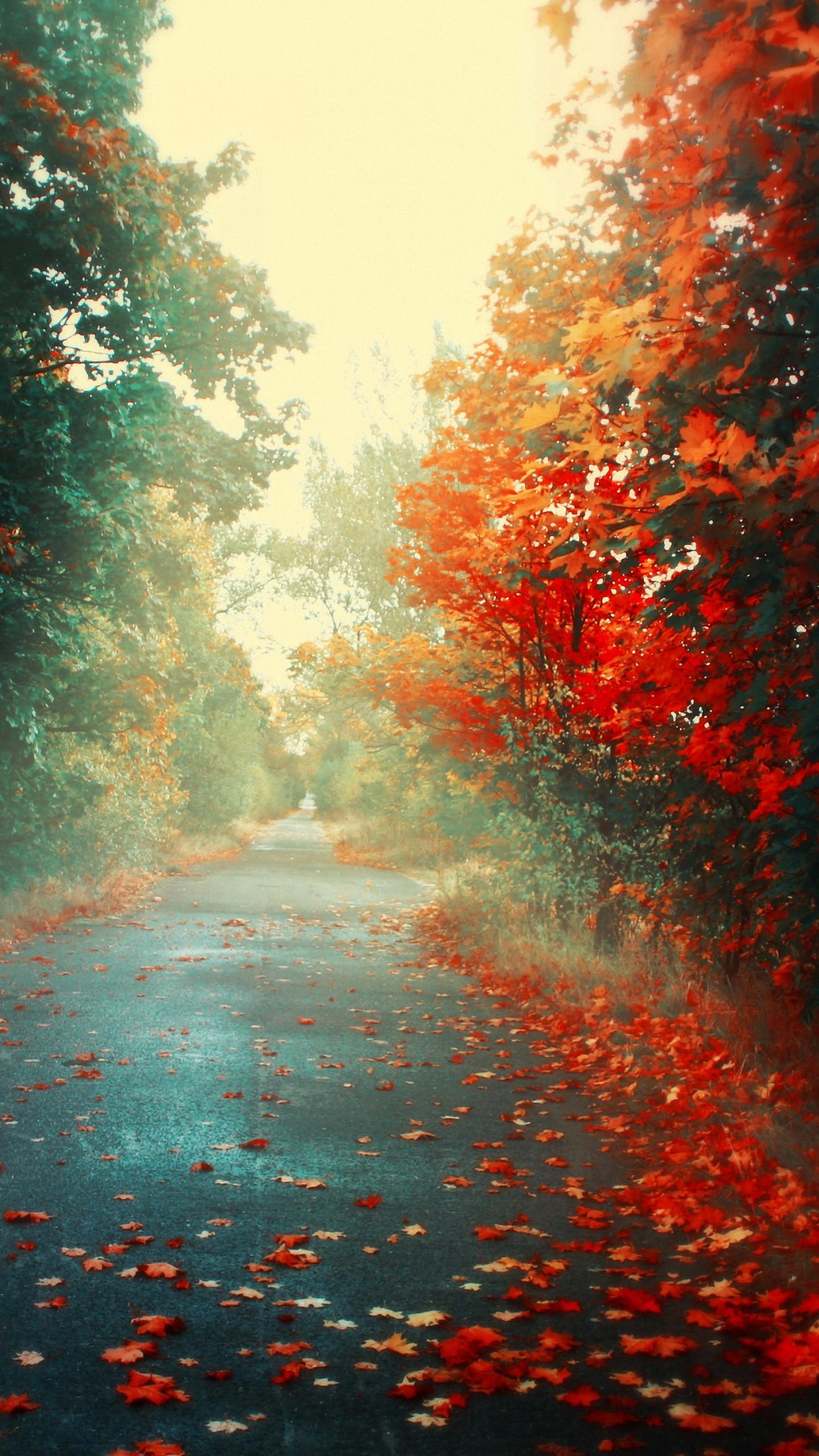Roadside Pink Trees lg phone Wallpapers HD x Download