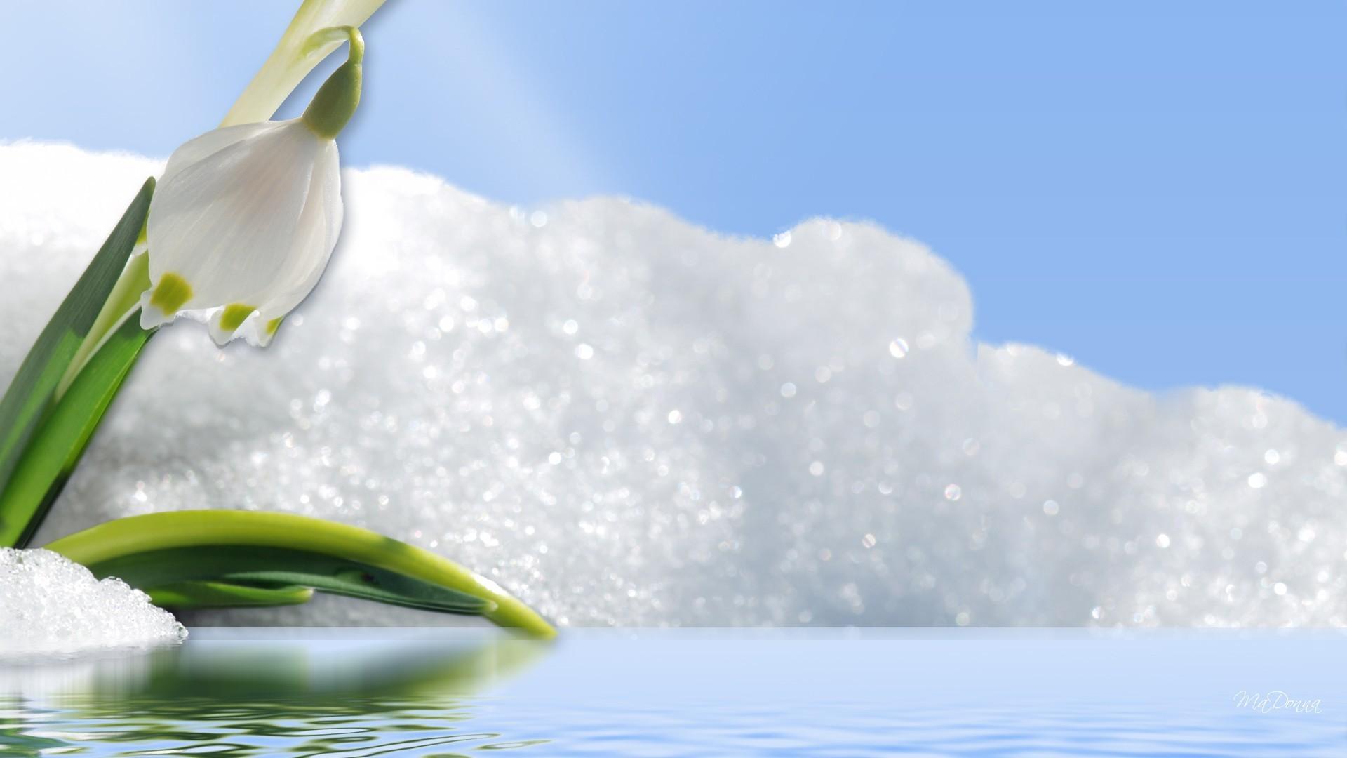Sparkle Tag – Sparkle Snow Pool Fleurs Winter Freeze Shine Water Frost  Flower Pond Drop Frozen