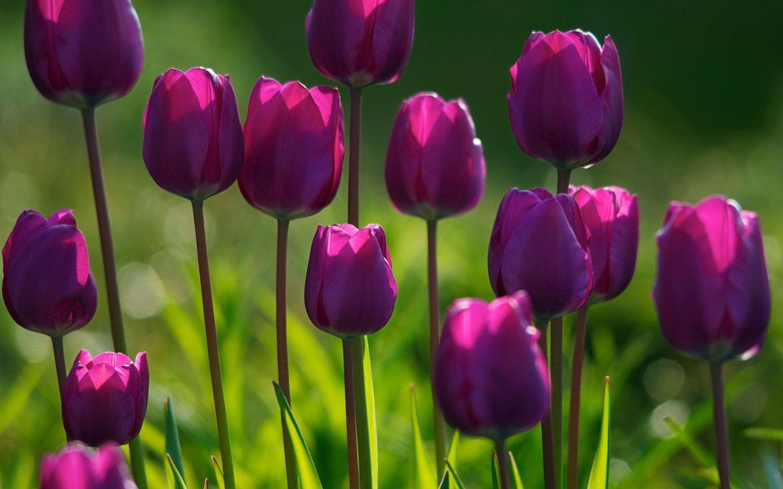 Free Spring Screensavers #6897514