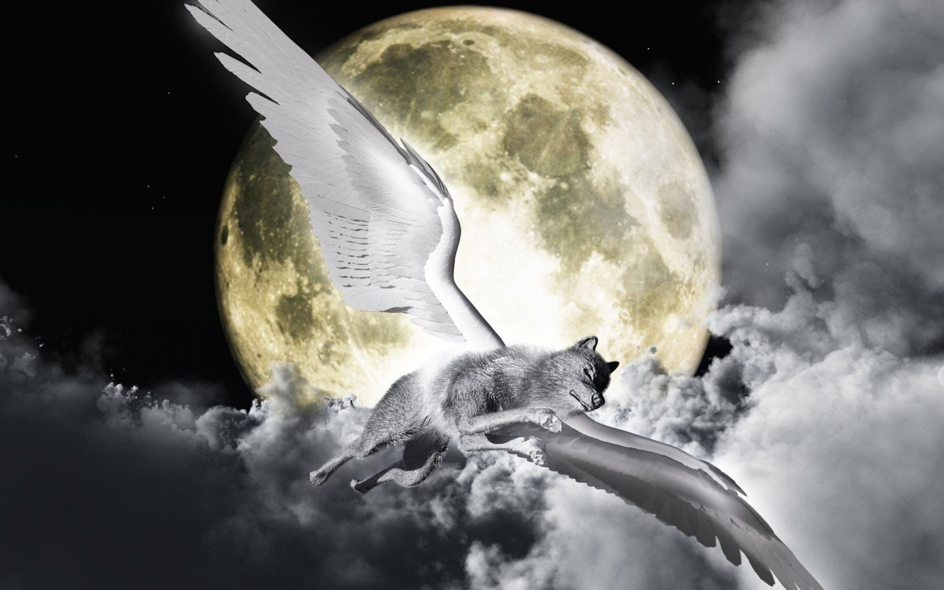 Angel wallpapers wolf