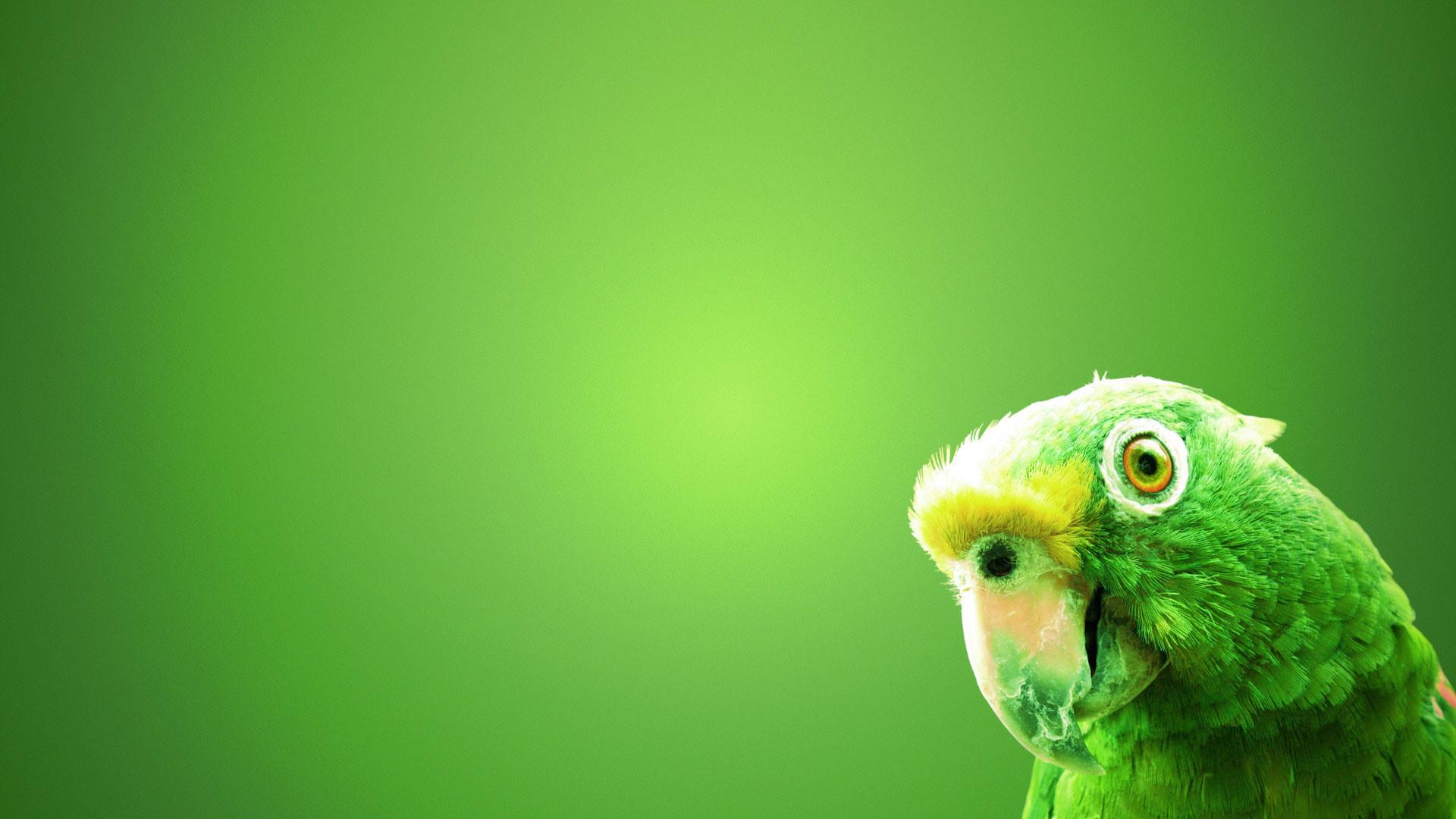 hd pics photos green background parrot cute desktop background wallpaper