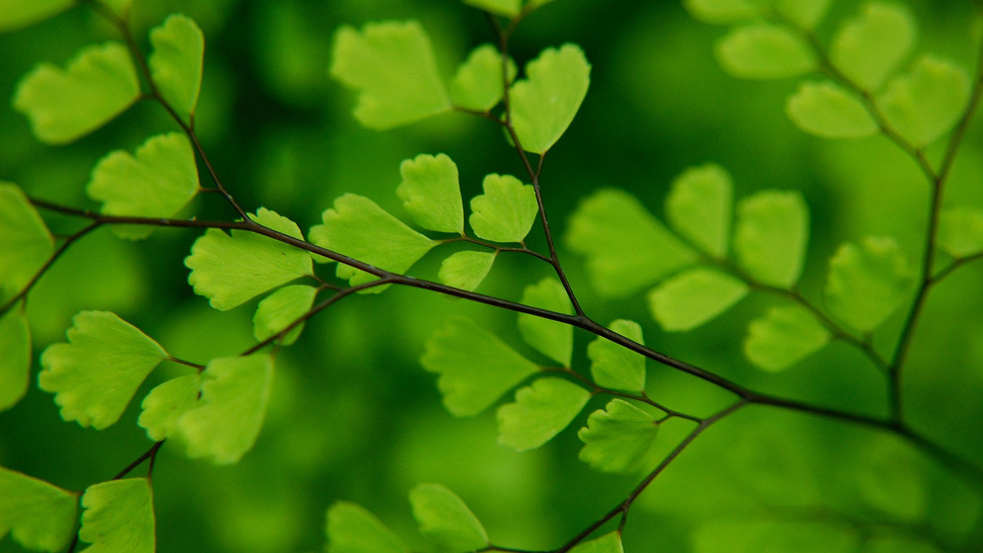 hd pics photos green leaves in nature cute desktop background wallpaper