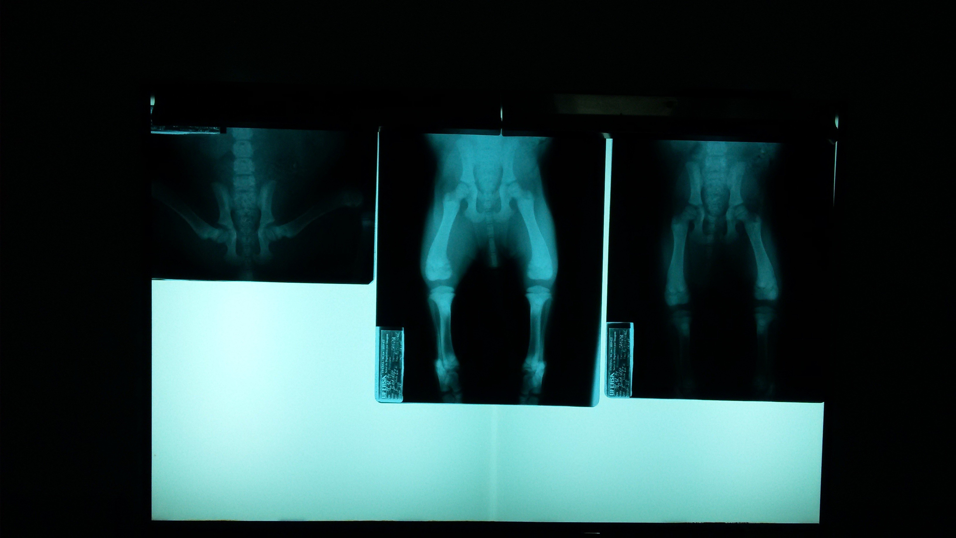 light color darkness lighting stage image screenshot veterinary sense  special effects computer wallpaper radiograph pelvis