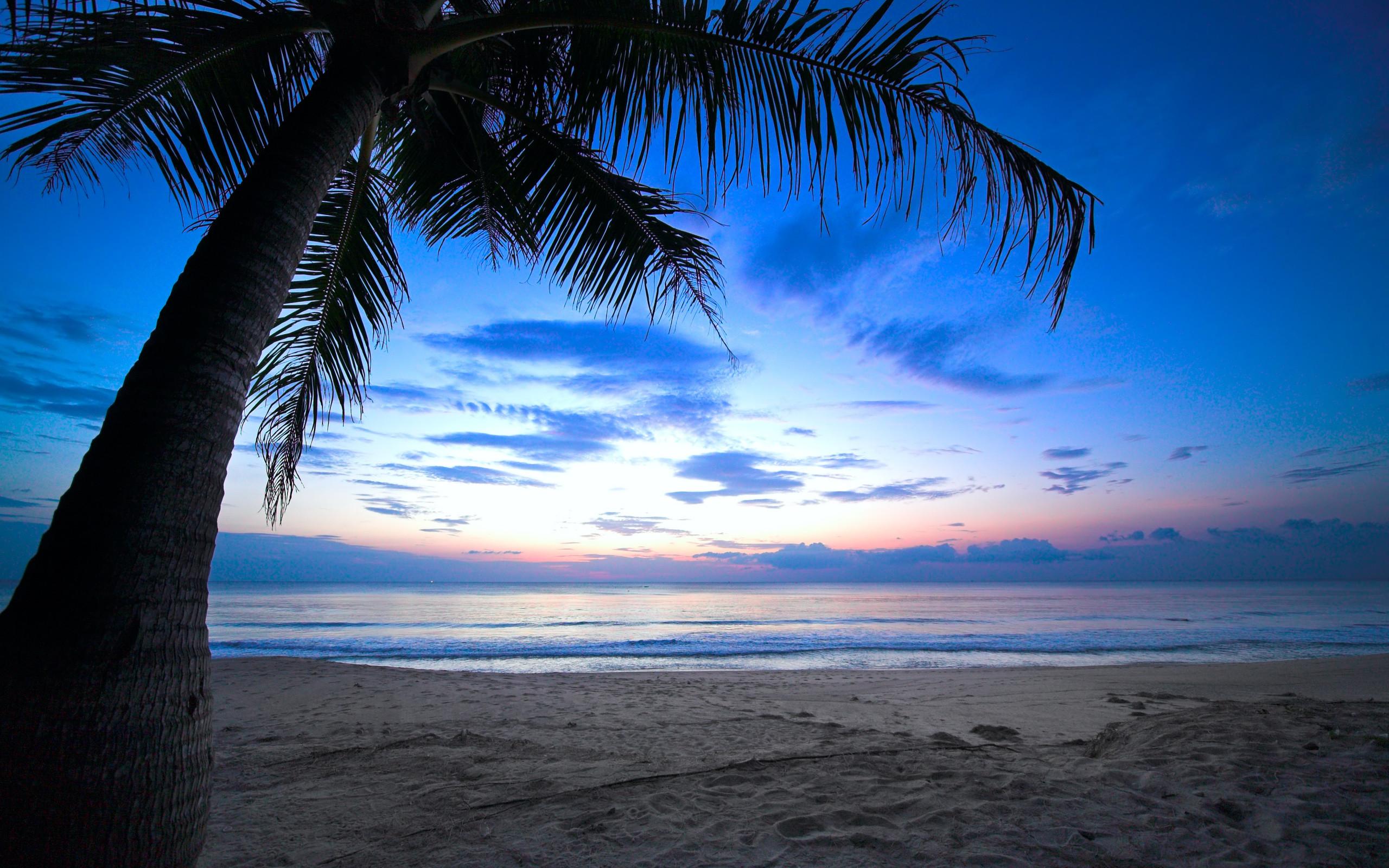 Caribbean Night Sky   cloudy sky weeping palm tree tropical sunset  caribbean ocean wallpaper .