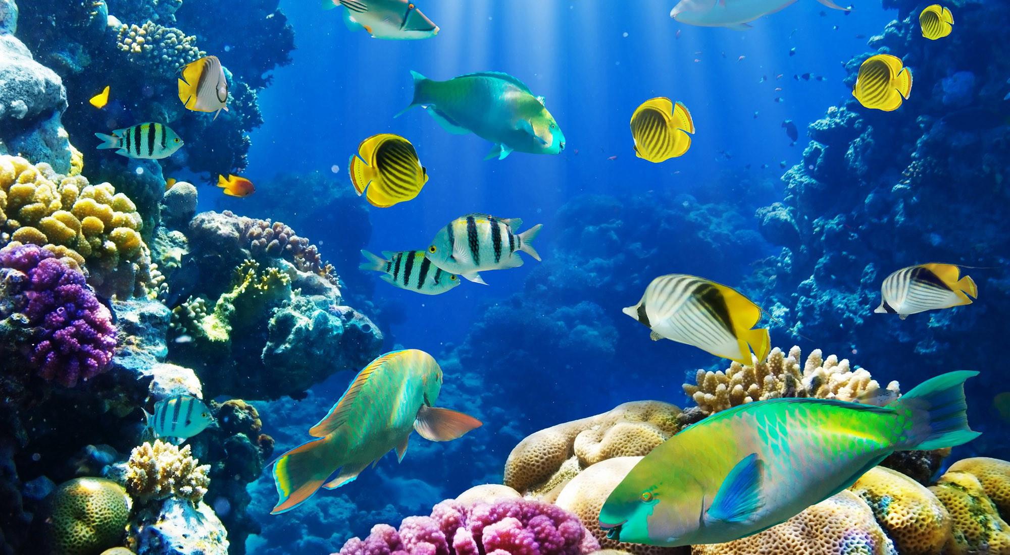 Fish Wallpapers For Desktop Free Download