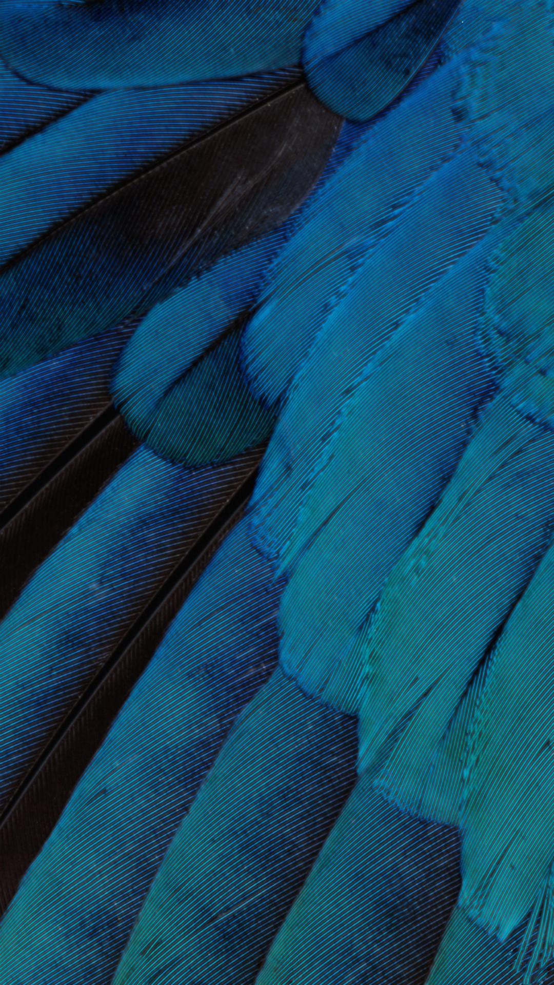iOS9 Wallpaper Blue Feather Pattern Art iPhone 8 wallpaper
